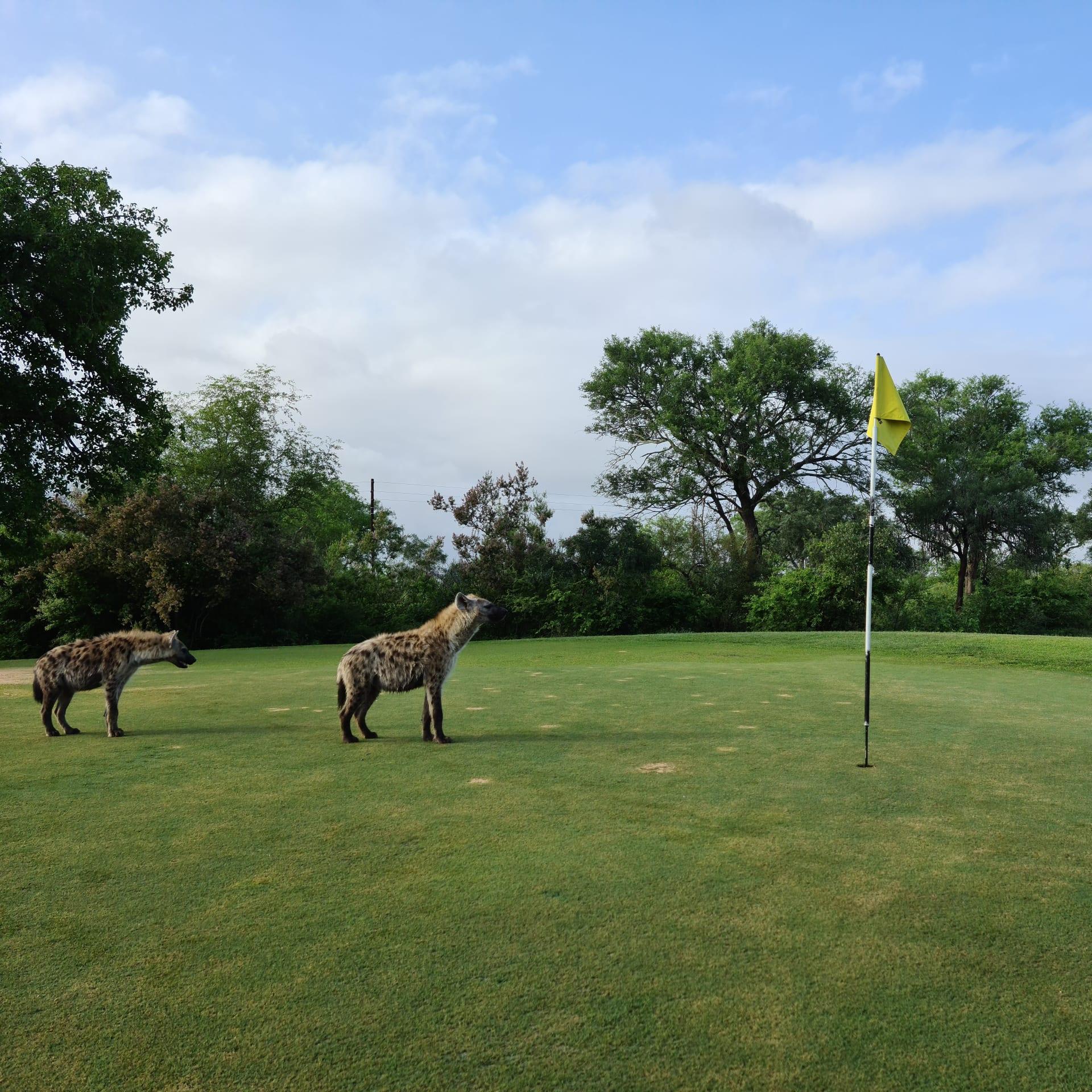 فقط بهذا الملعب بجنوب أفريقيا.. ستمارس الغولف بين الزرافات والأسود