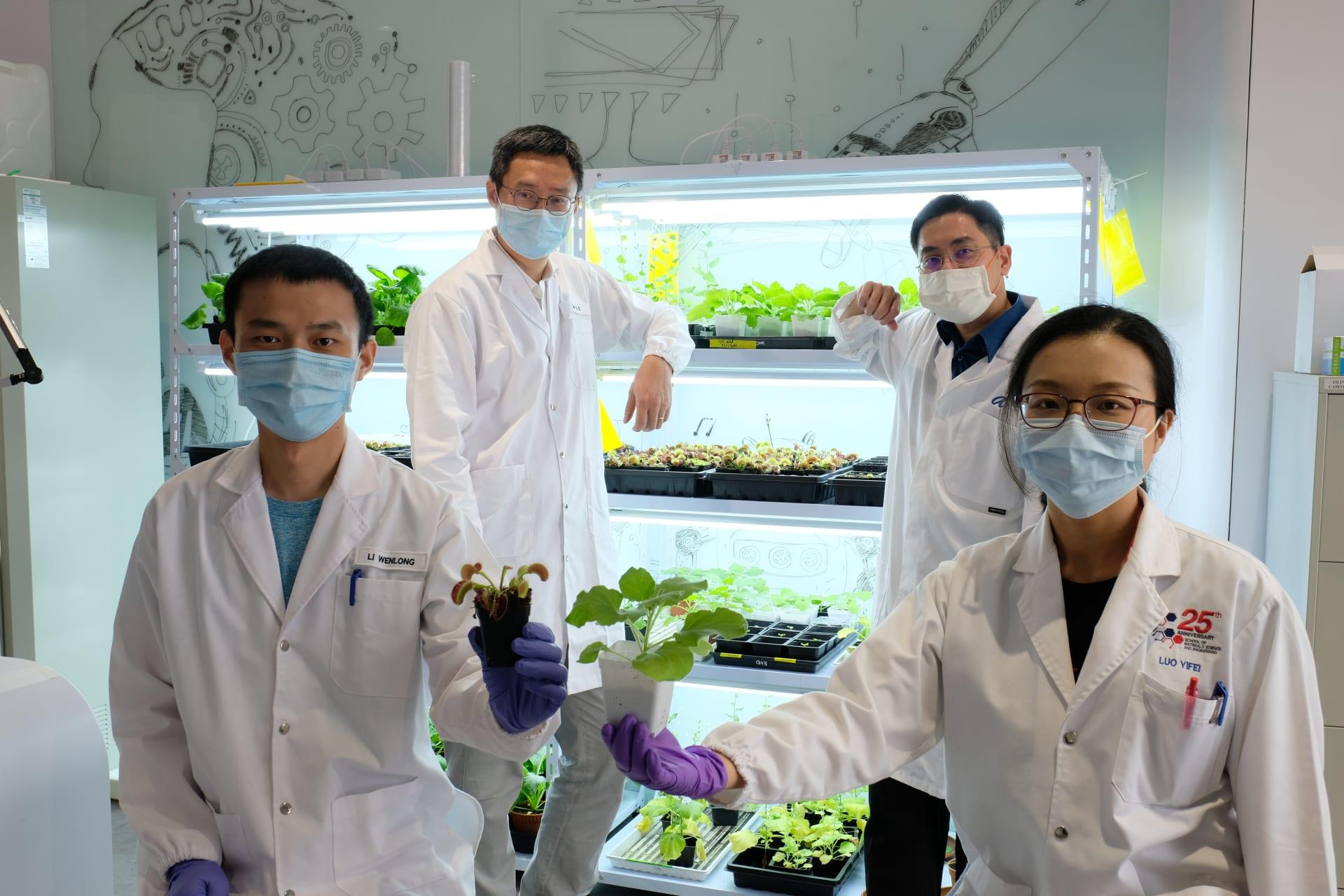 """باحثون من سنغافورة يطورون أداة يمكنها """"التواصل"""" مع النباتات..كيف؟"""