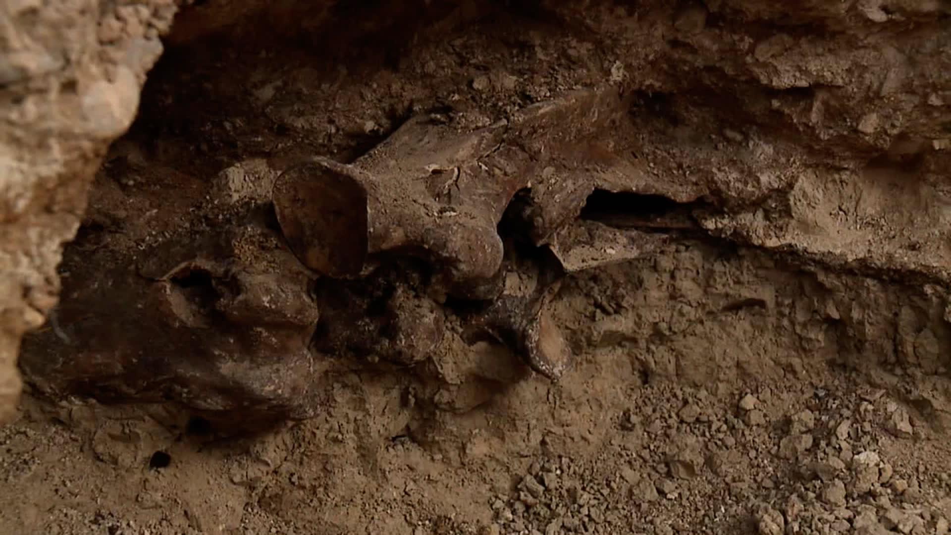 اكتشاف لأحفورة من العصر الجليدي يحول المسبح الجديد لثنائي بأمريكا إلى موقع حفر