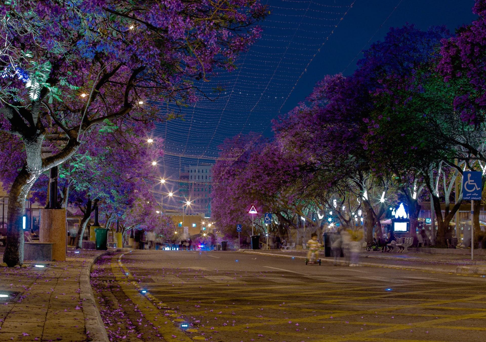 أشجار الجاكرندا في مدينة أبها