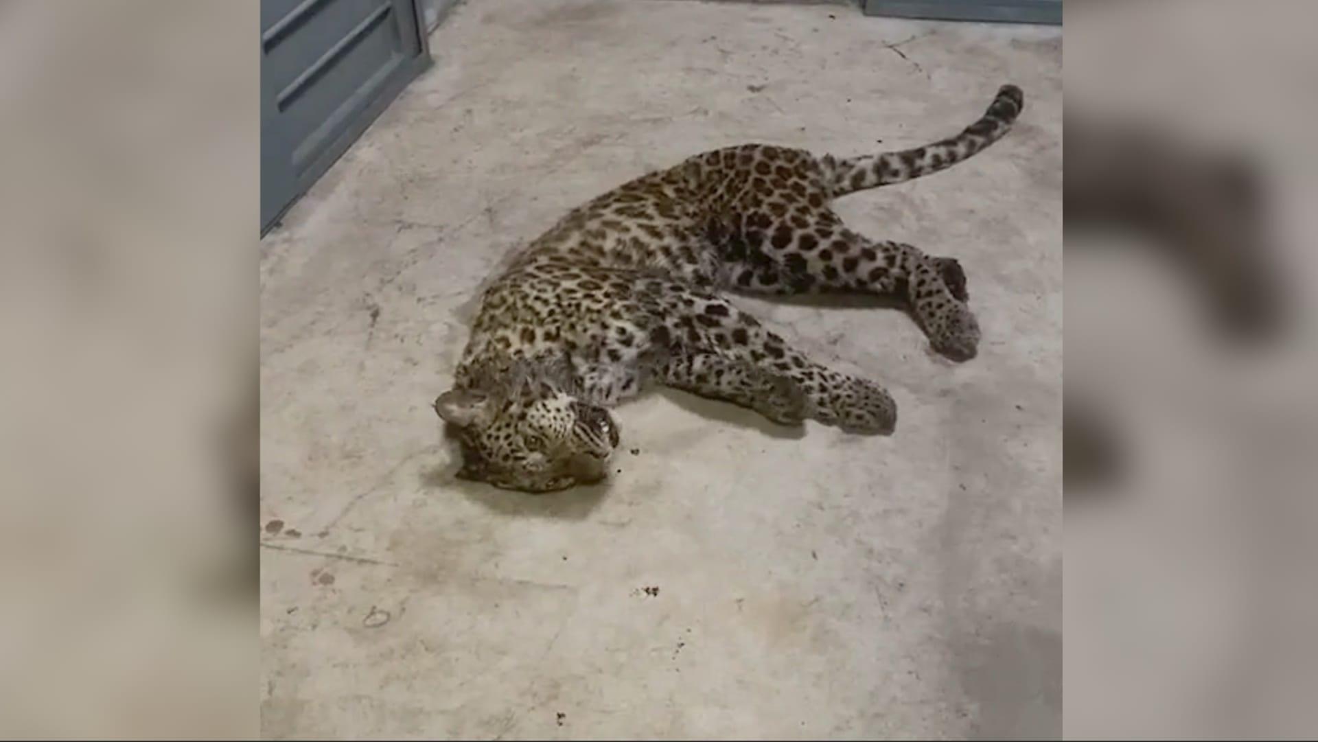 في الصين.. هروب 3 نمور من حديقة حيوانات وعدم إخطار الجمهور لمدة لأسبوع