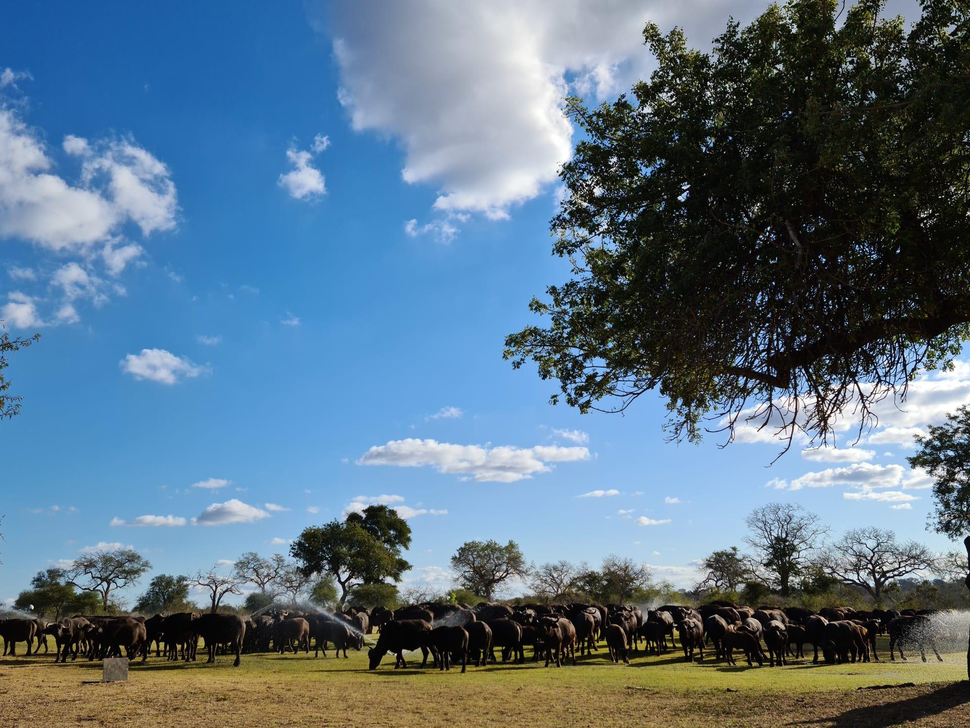 ملعب غولف في جنوب أفريقيا