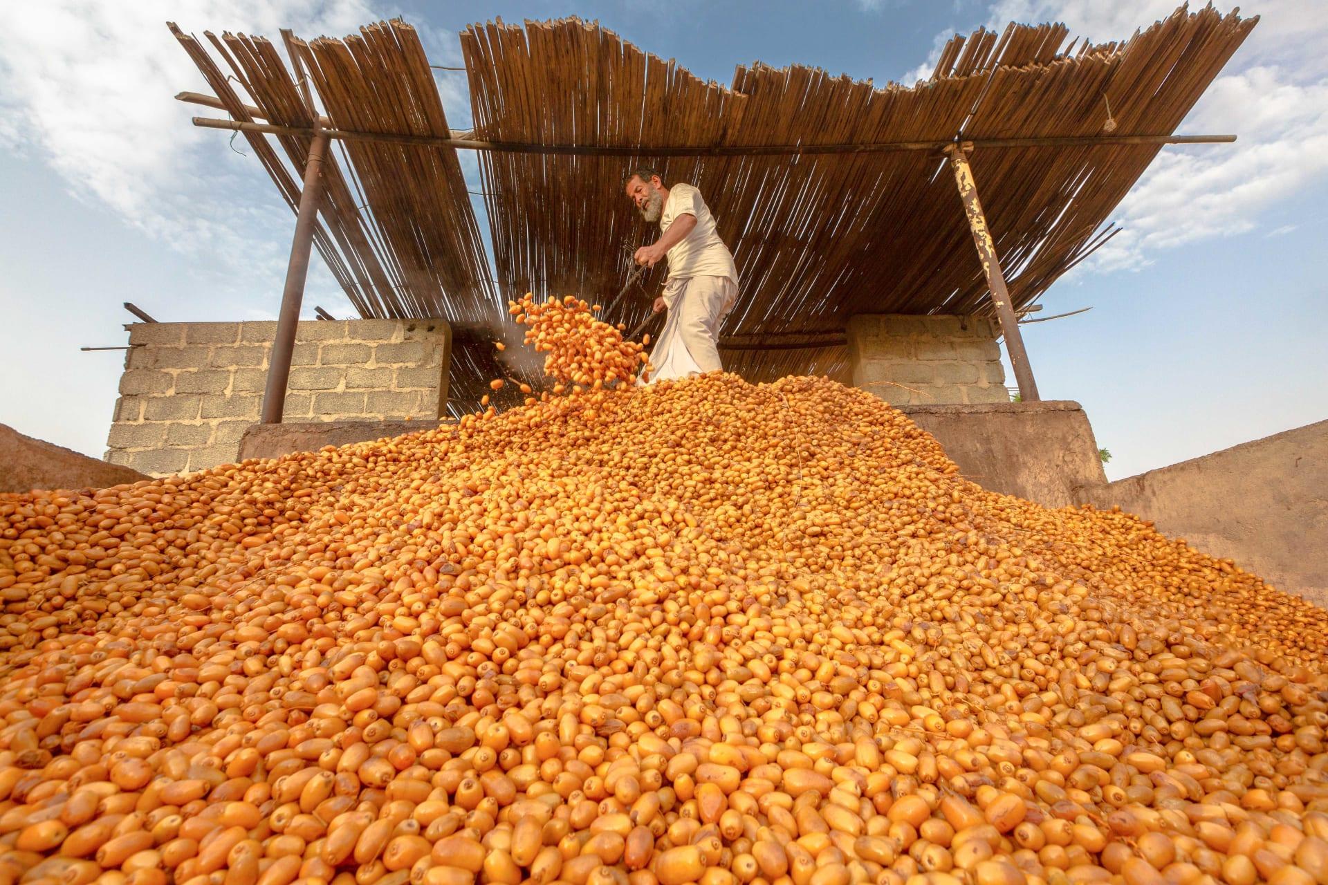 سلطنة عمان تتلون بالأصفر الزاهي مع قدوم موسم التبسيل.. فما هو؟
