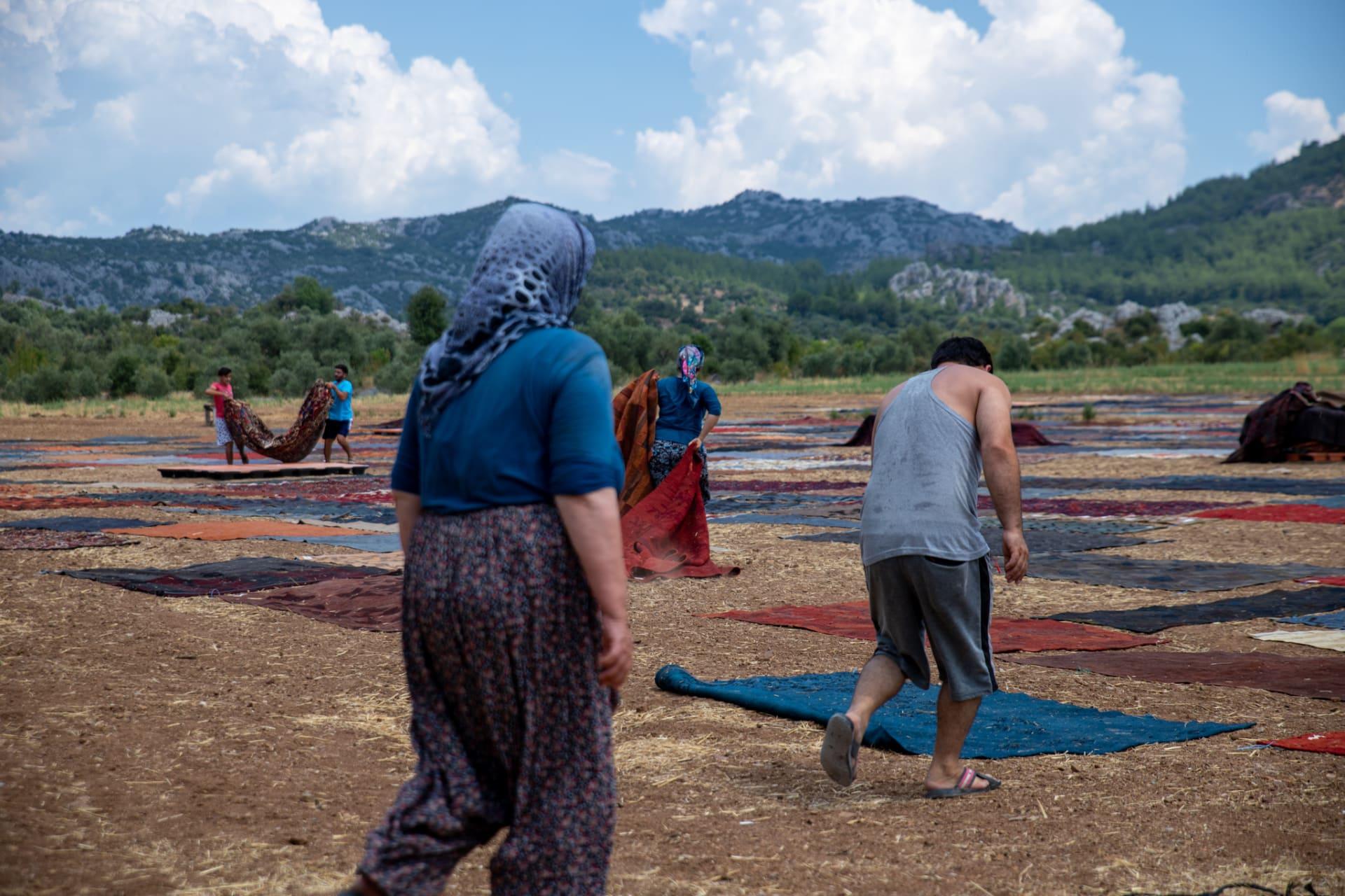 حقول السجاد بتركيا.. تقليد فريد يزين الحقول الخضراء بألوان زاهية مع قدوم الصيف