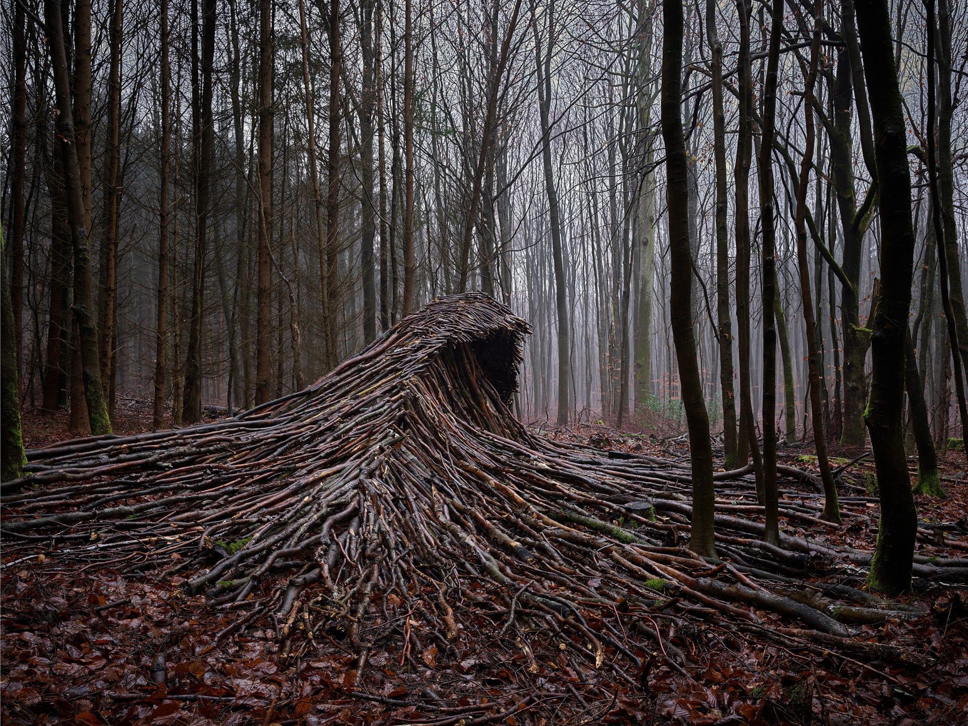 كأنها تسونامي يضرب الغابة..ما حكاية هذه الموجات في ألمانيا؟