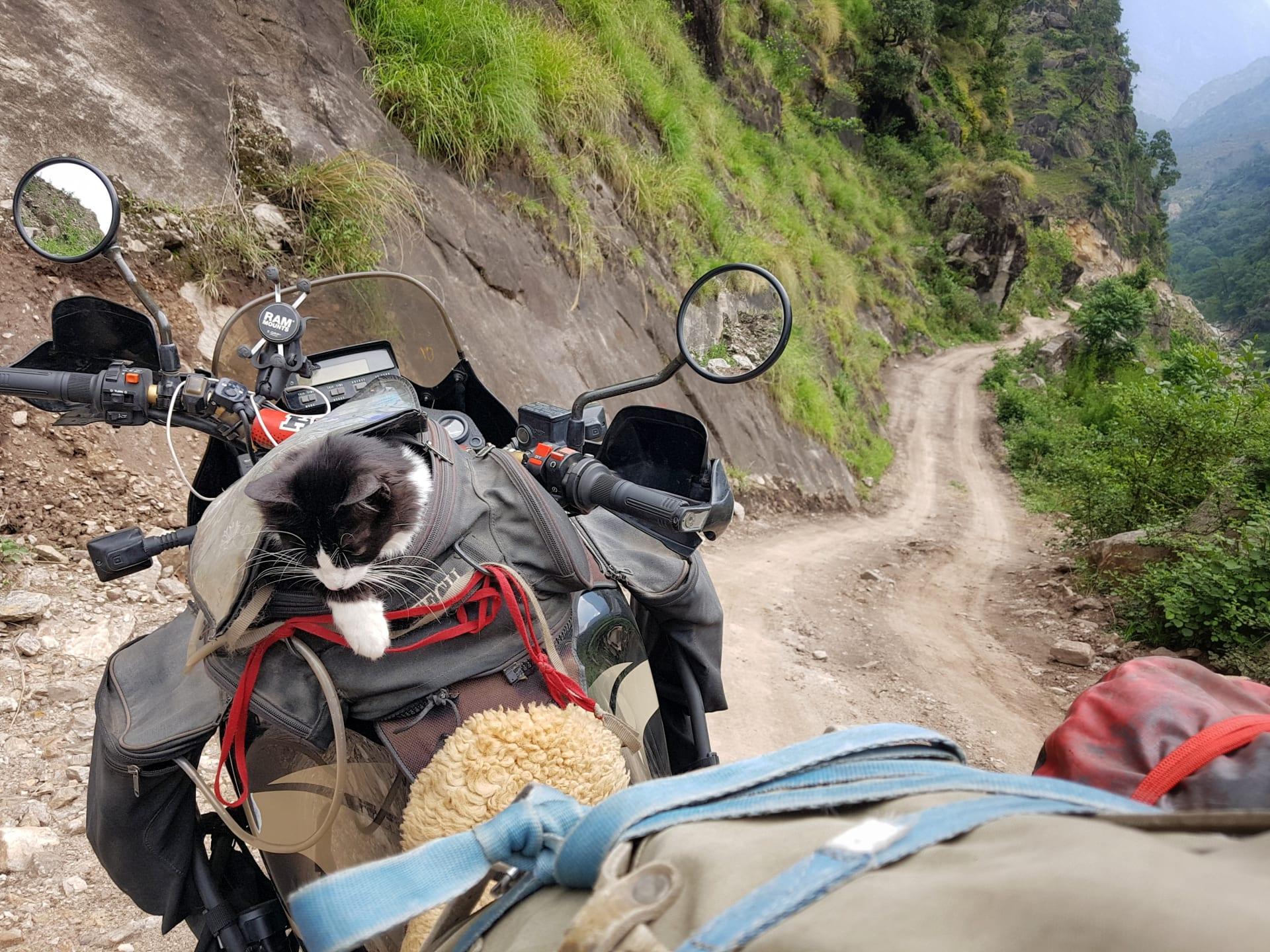 يجذب الأنظار برفيقة سفر غير اعتيادية.. يجوب هذا الألماني العالم مع قطته على متن دراجته النارية