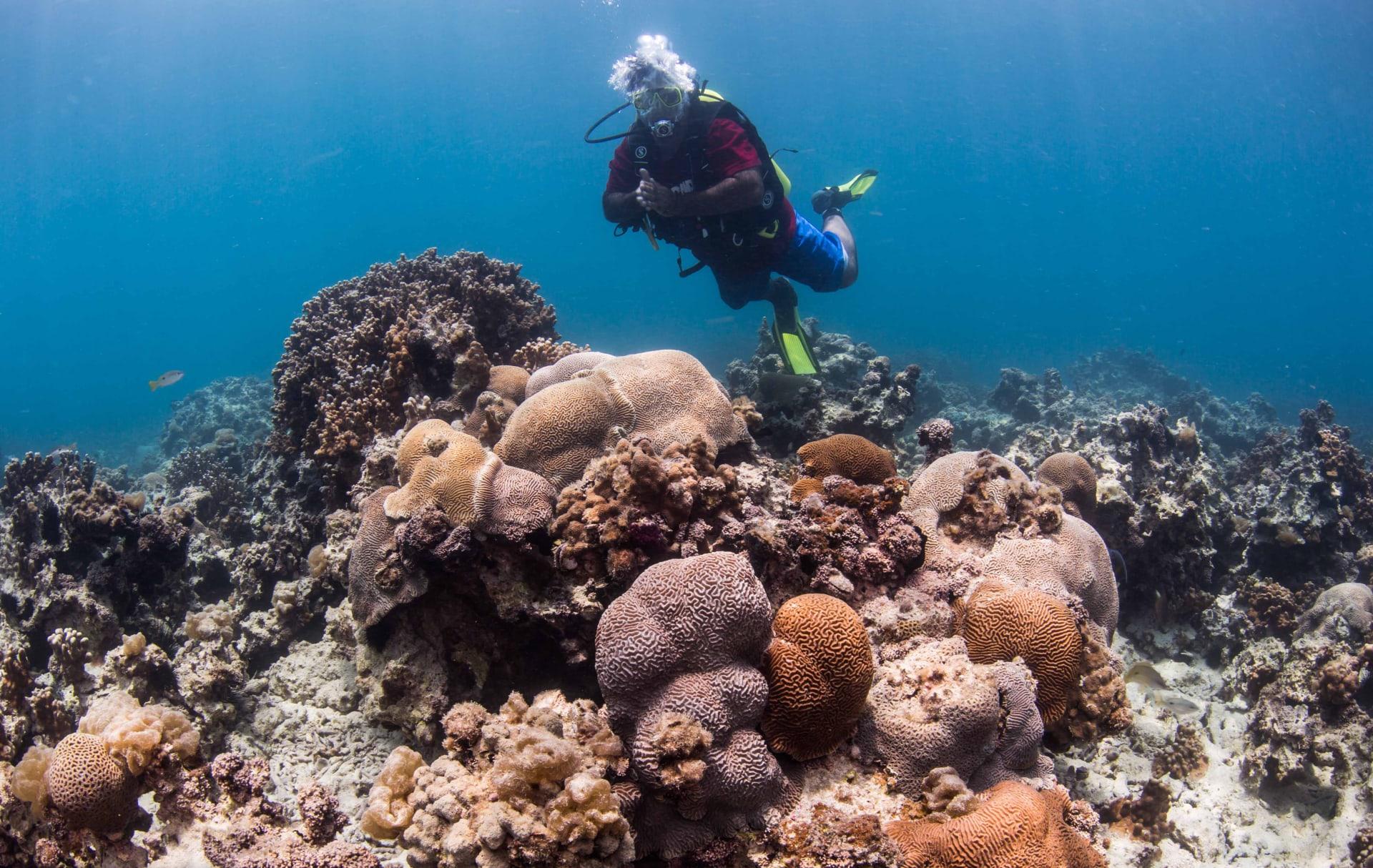أكثر من مليون مستعمرة.. ألق نظرة داخل أكبر مشروع لإعادة تأهيل الشعاب المرجانية في المنطقة