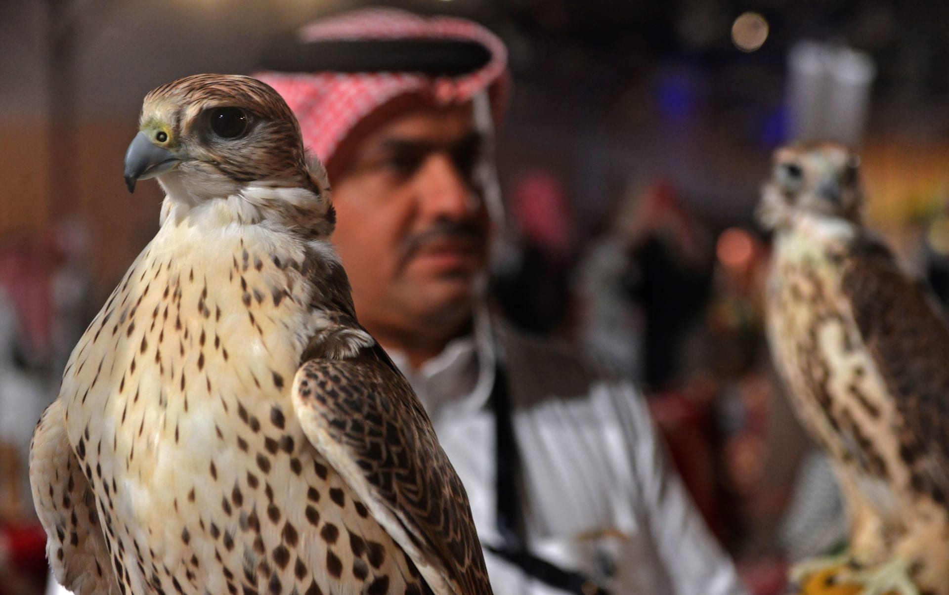ارض يحمل صقراً خلال المعرض السعودي الأول للصقور والصيد في العاصمة الرياض في 7 ديسمبر 2018