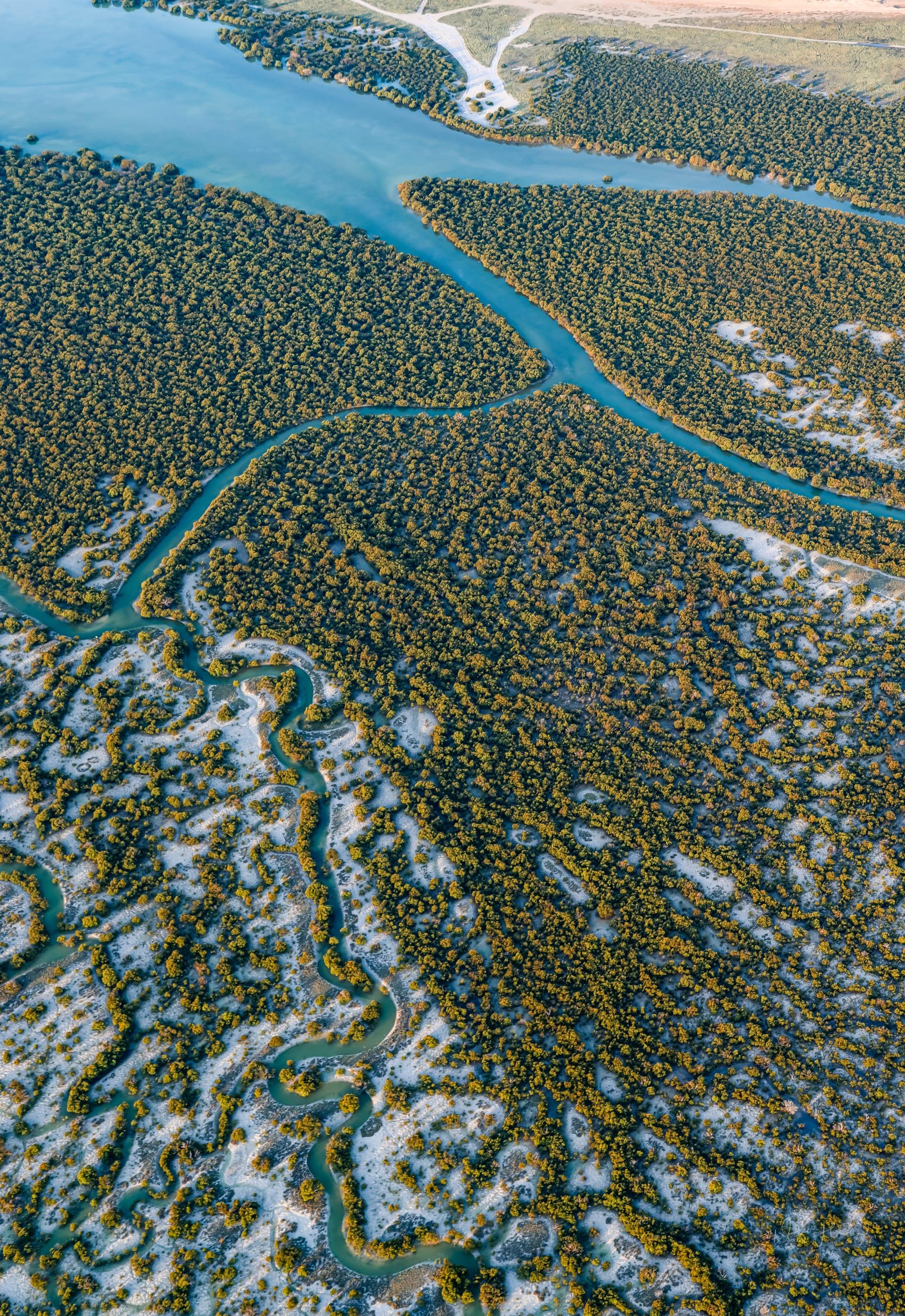 قطر من فوق.. مصورة توثق مشاهد جوية حالمة لأشجار القرم الزاهية في الذخيرة