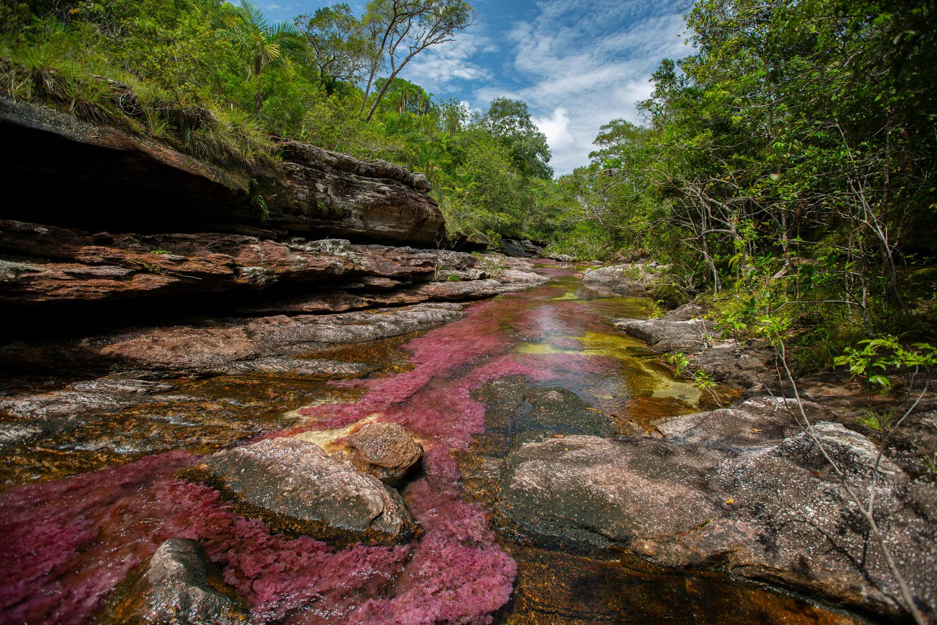 نهر الألوان الخمسة في كولومبيا