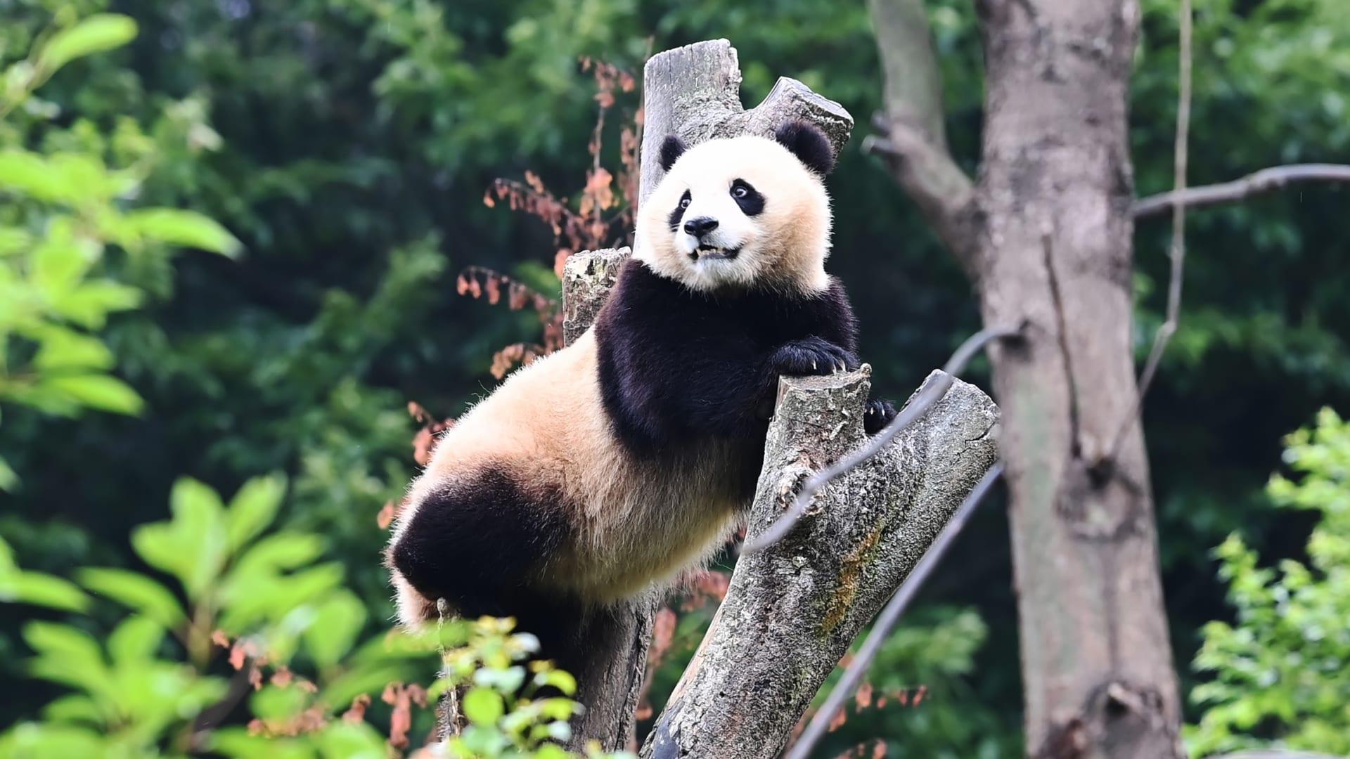 أثرياء الصين.. ما هي وجهاتهم المفضلة خلال جائحة كورونا؟