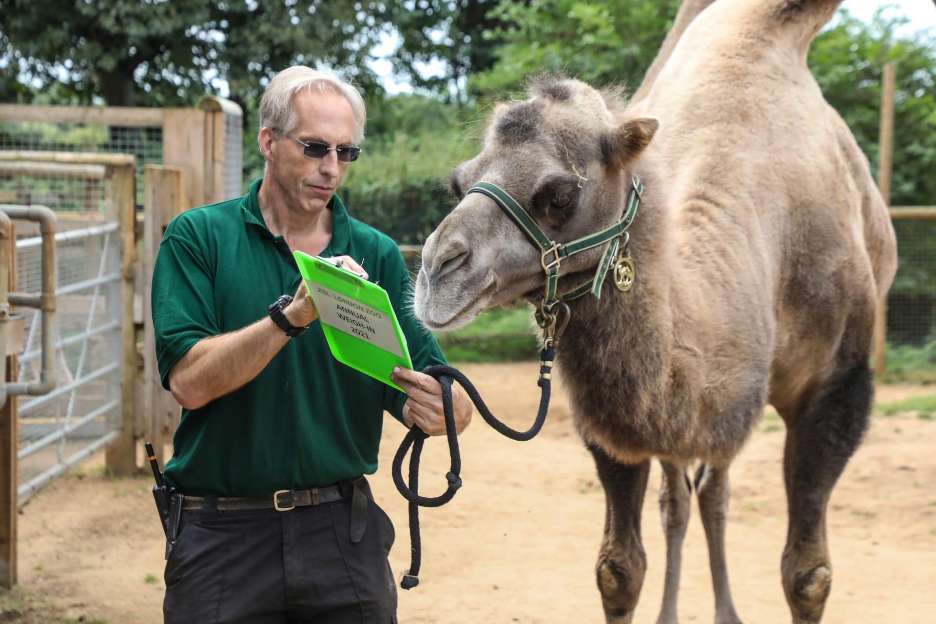 في لندن.. شاهد حراس حديقة حيوانات وهم يلجأون لحيل مبتكرة لأخذ قياسات الحيوانات