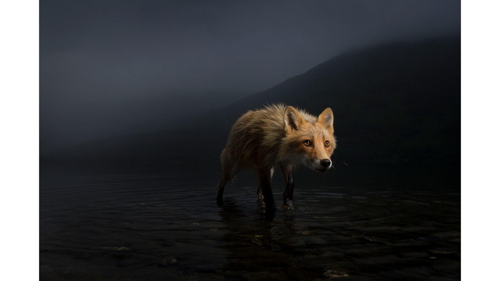 ألق نظرة على بعض الصور الساحرة التي شاركت في مسابقة مصور الحياة البرية لعام 2021