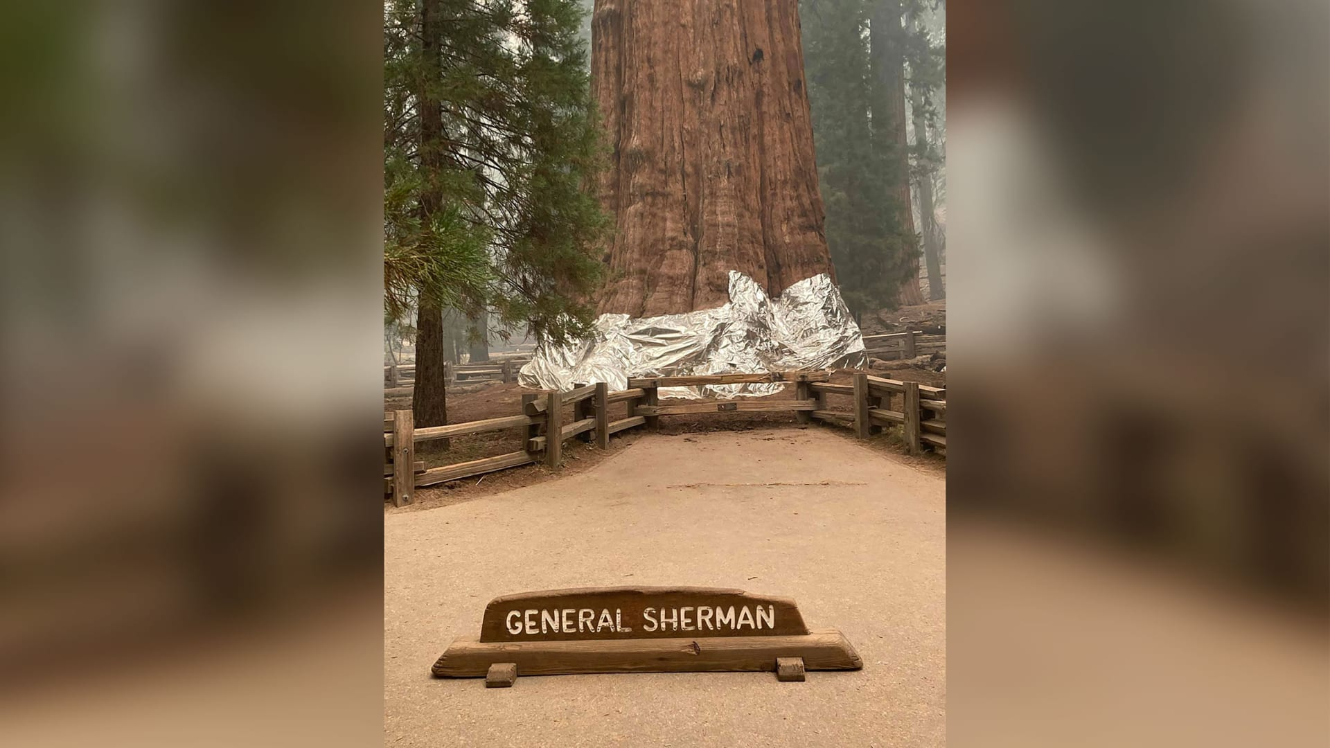هكذا يحمي الأميريكيون الأشجار التاريخية في الغابات من الحرائق + صور