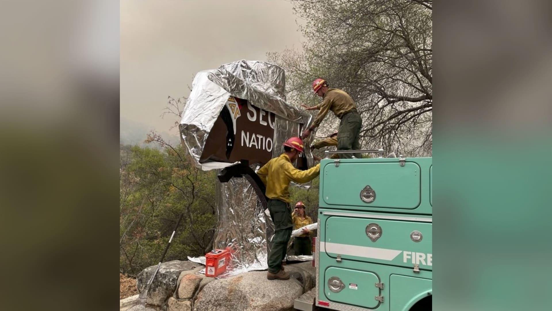 إنقاذ أكبر شجرة في العالم من حرائق الغابات في كاليفورنيا..كيف؟