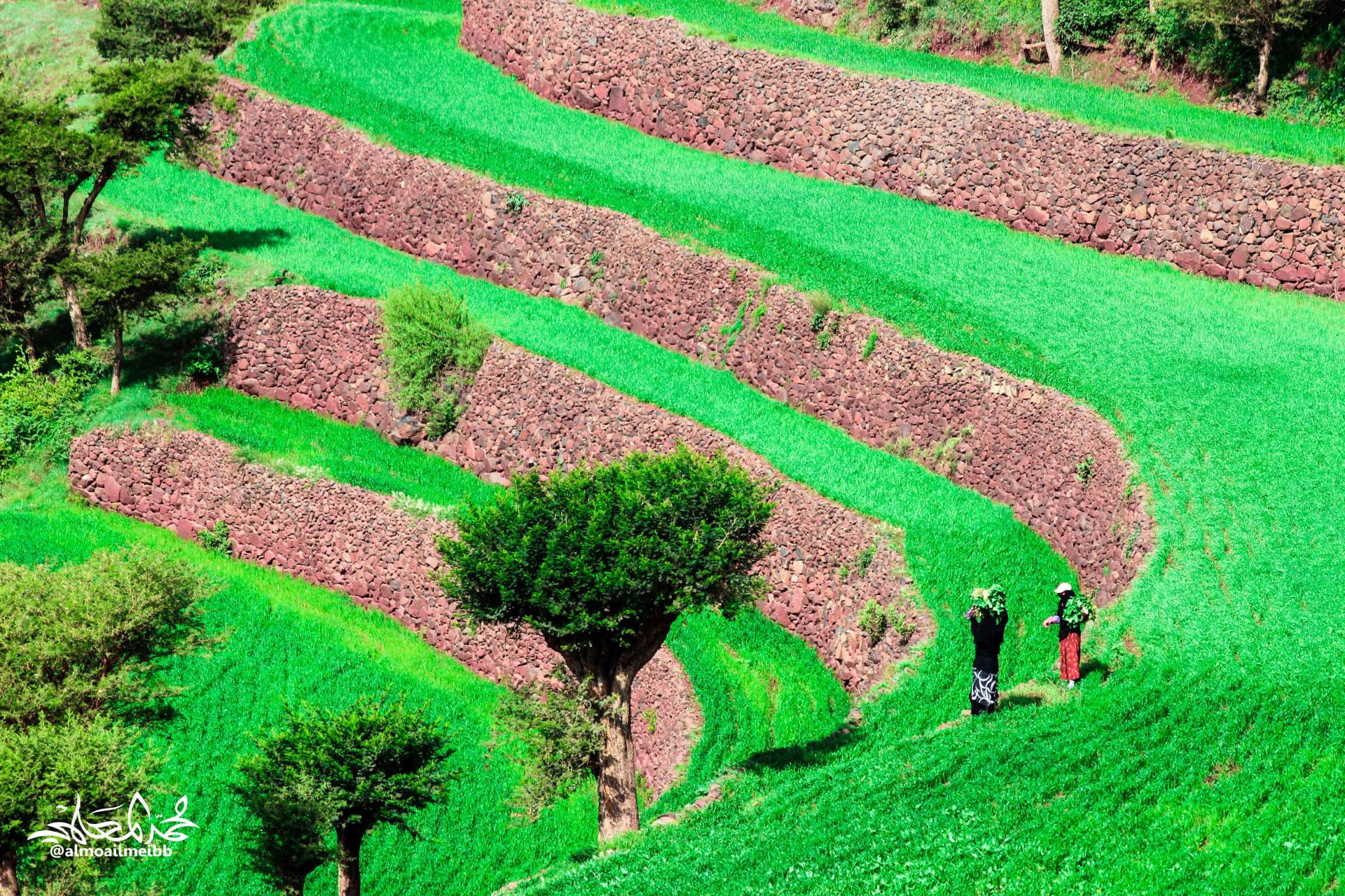 طبيعة تحتضن ربيعاً أبدياً.. إليك جمال مدرجات إب الزراعية في اليمن