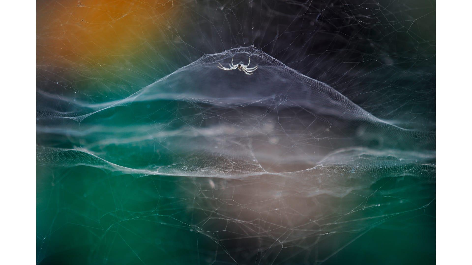 بينها لقطة لغوريلا تستحم تحت المطر بعدسة مصور كويتي.. إليك أبرز الصور من مسابقة مصور الحياة البرية لعام 2021