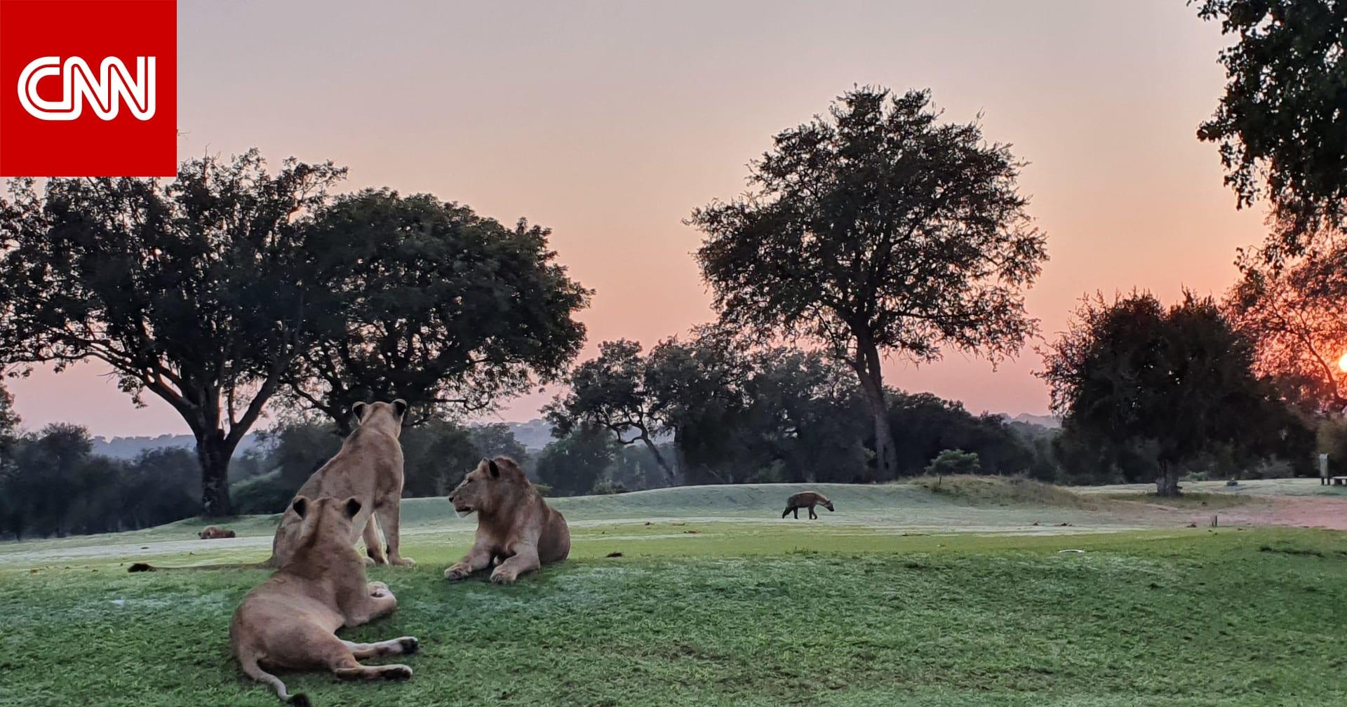 هل تجرؤ على لعب الغولف بجنوب أفريقيا بين الحيوانات الخمسة الكبار؟