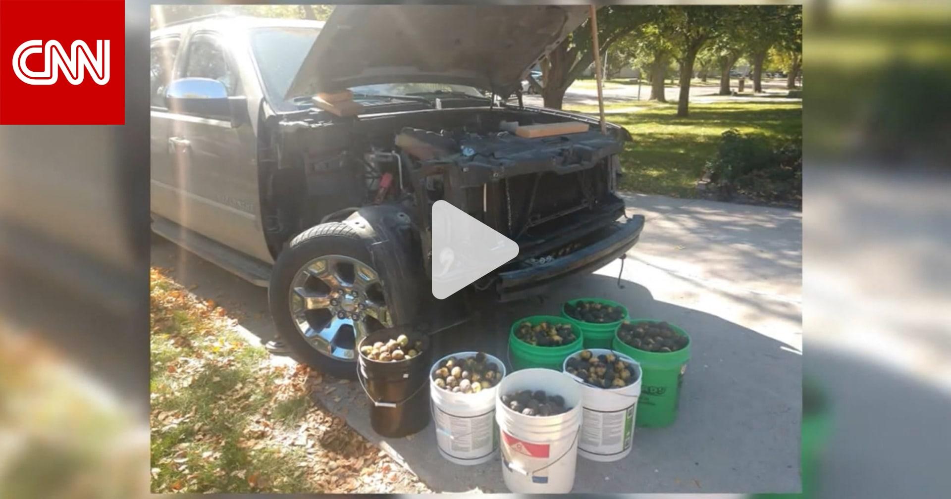 أمريكي يمضي أيامًا في تنظيف شاحنته من آلاف ثمار الجوز.. خبأها سنجاب داخلها لمؤنة الشتاء
