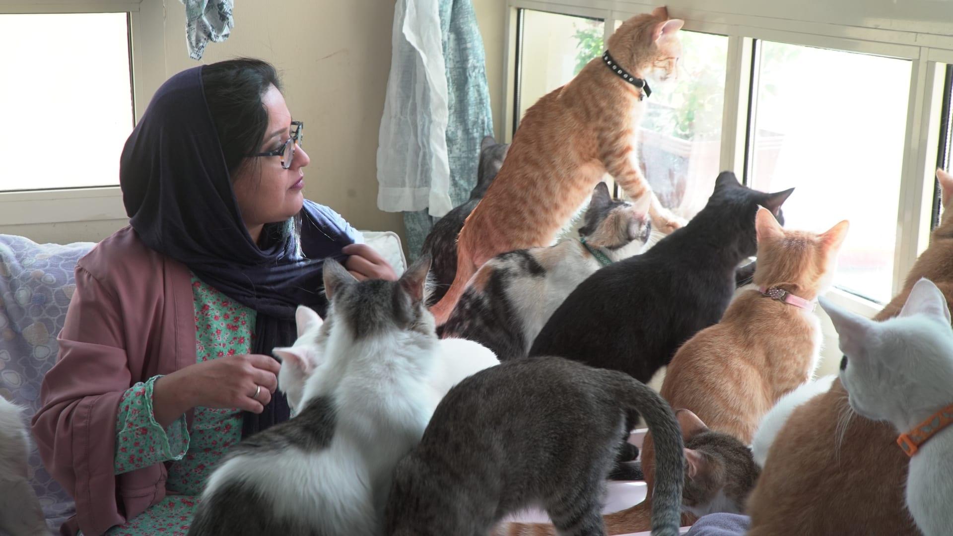 رغم إصابتها بالحساسية.. إماراتية تجد هدف حياتها عبر اعتنائها بـ100 قطة