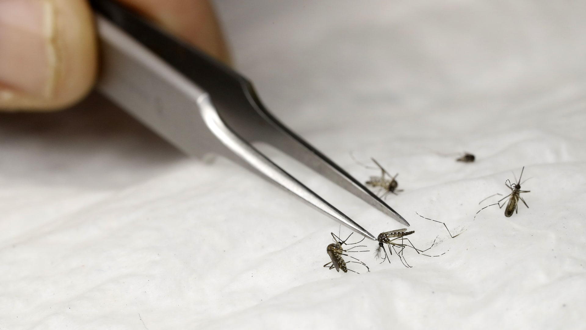 هل يمكن نشر فيروس كورونا عبر أشخاص لا يعانون أعراضه؟
