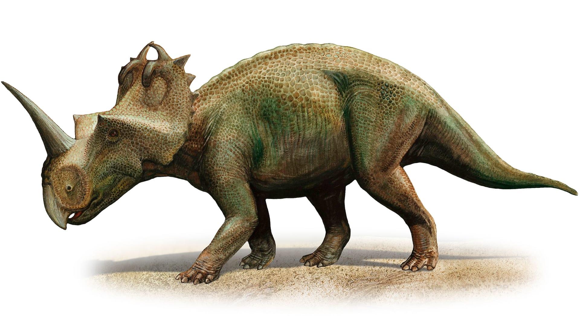 اكتشاف أصغر جمجمة لديناصور.. ماذا كان طعامه؟