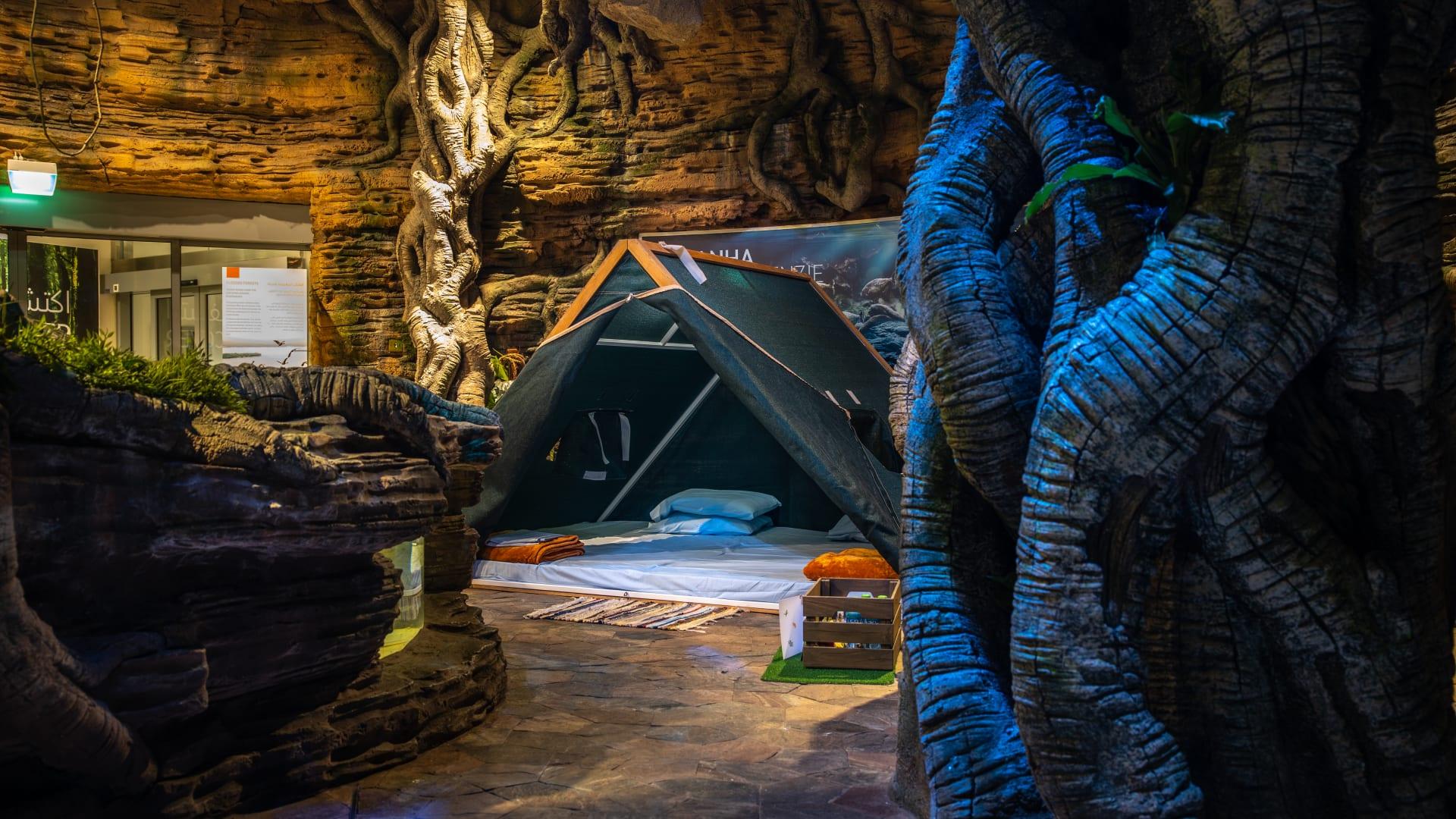 التخييم في غابة مطيرة The Green Planet