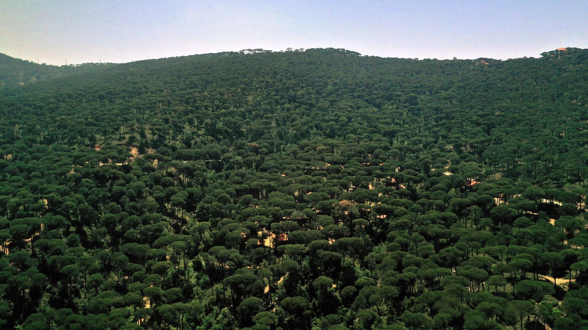 """غابة """"أرز الرب"""""""
