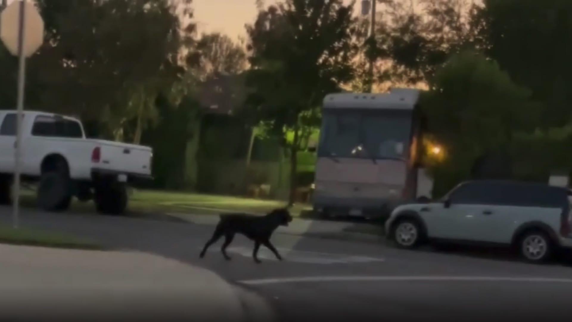شاهد.. كلاب شرسة تهاجم فتاة في الشارع وأحد المارة يوثق لحظة الرعب