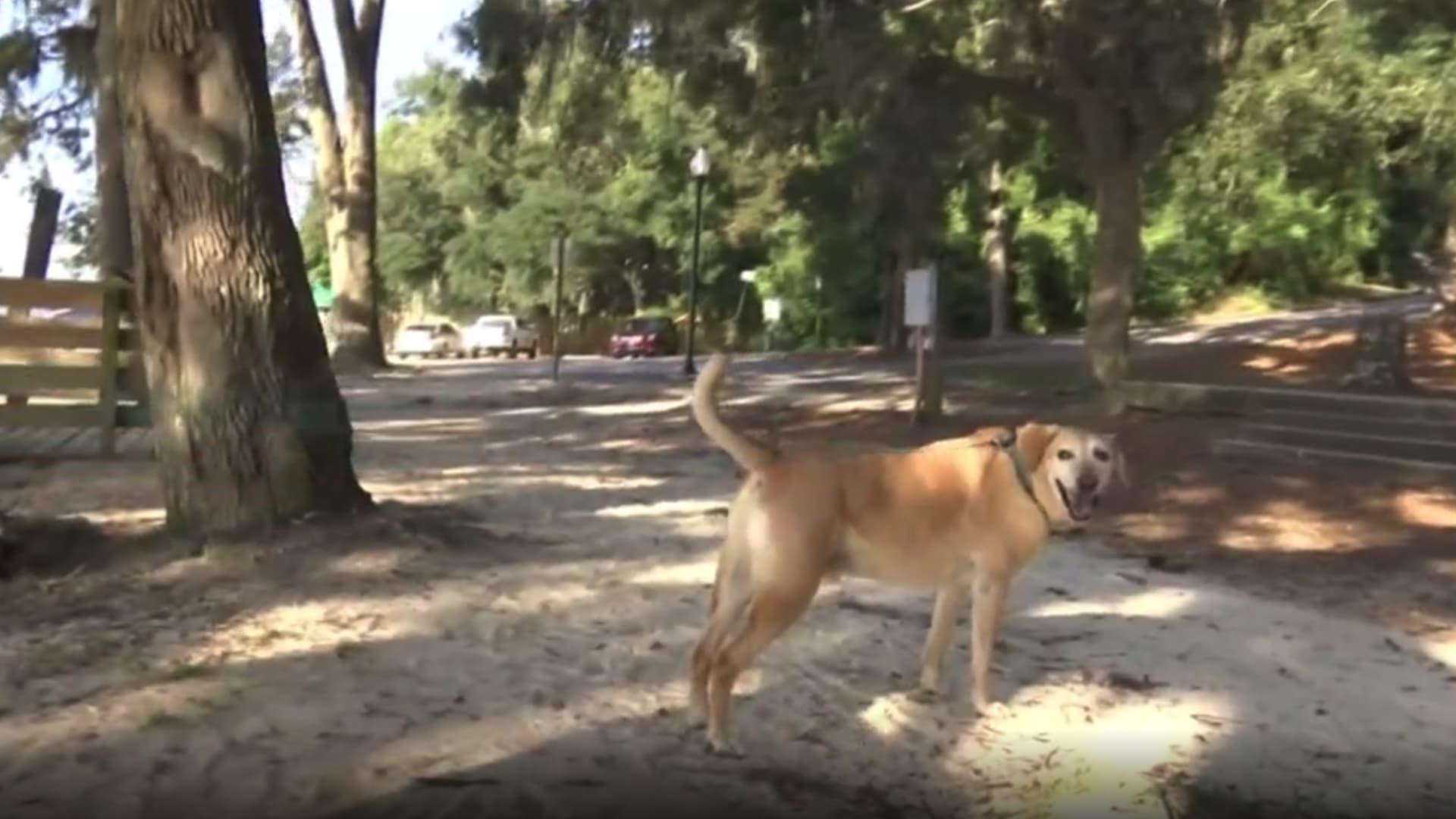 تمساح ضخم يقتل كلبا حاول حماية مالكه في مدينة أمريكية thumbnail