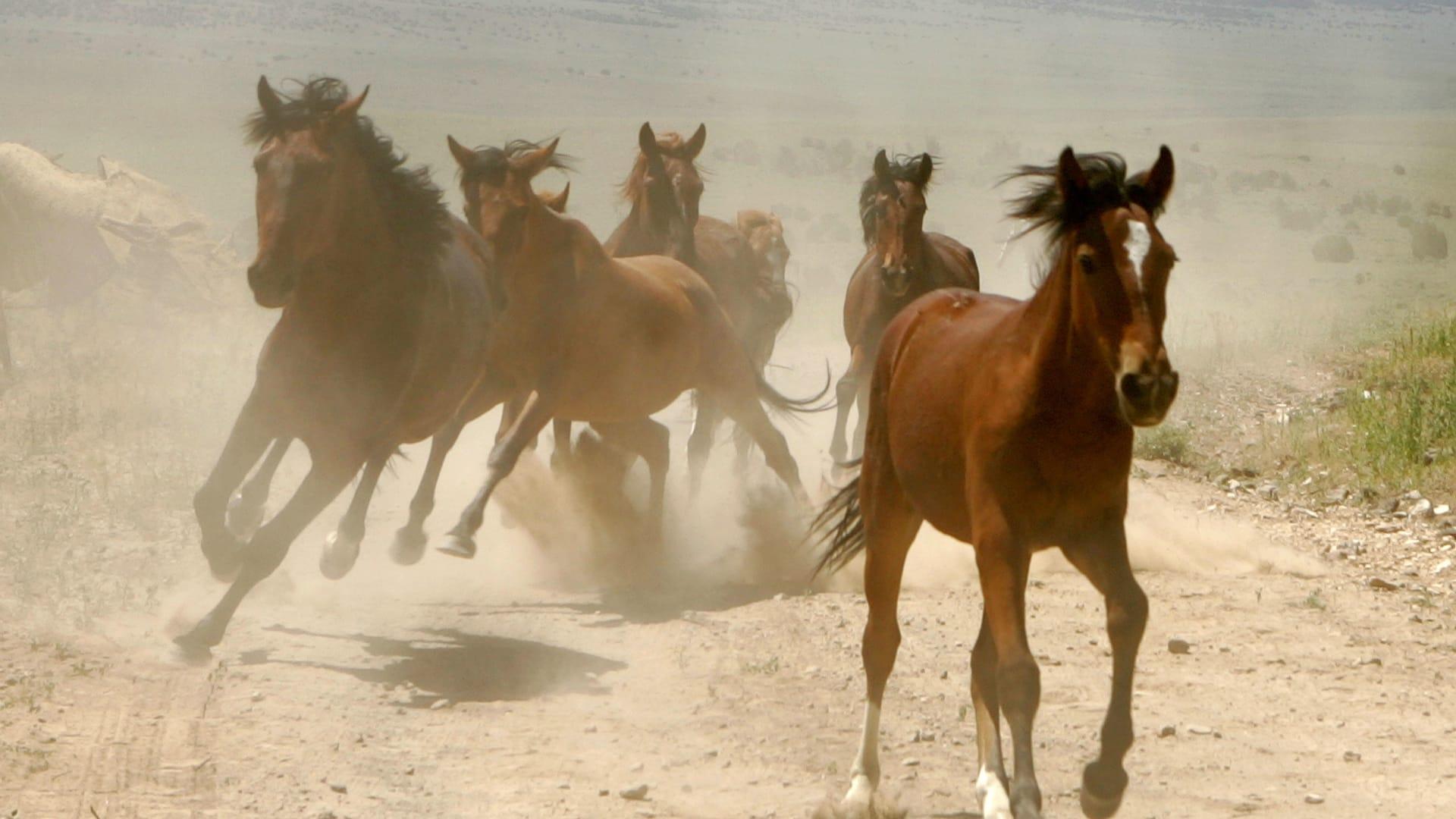 نشاط الحصان