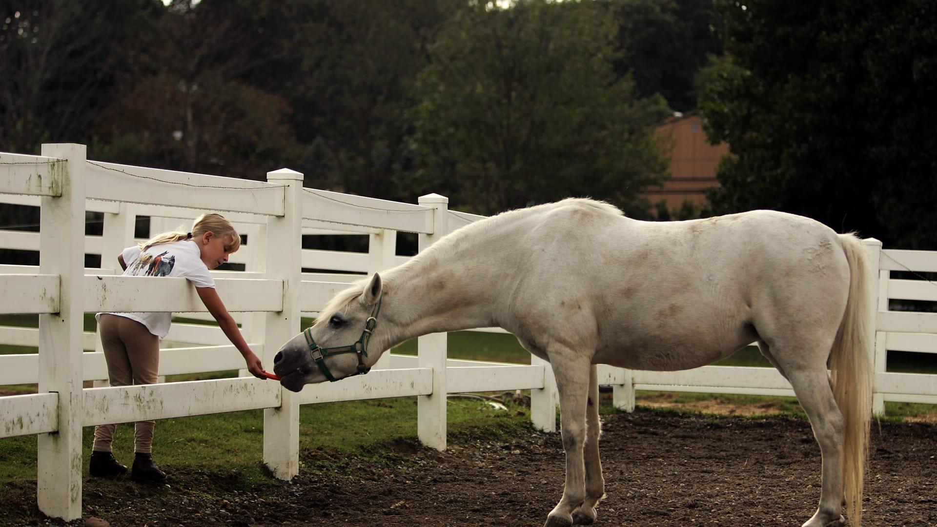 """هل تريد الحصول على ذروة آداء الحصان؟ إليك هذه القوانين """"الذهبية"""""""