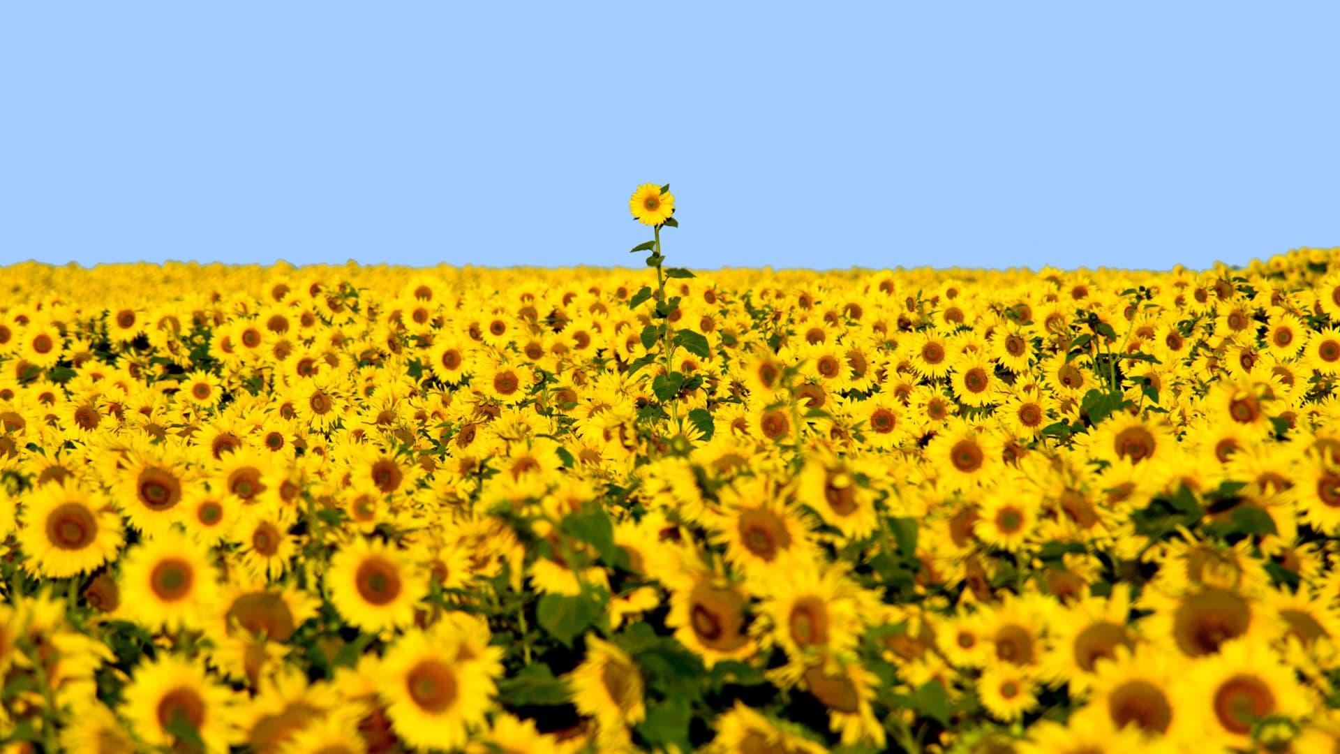 ارتدي اللون الأصفر