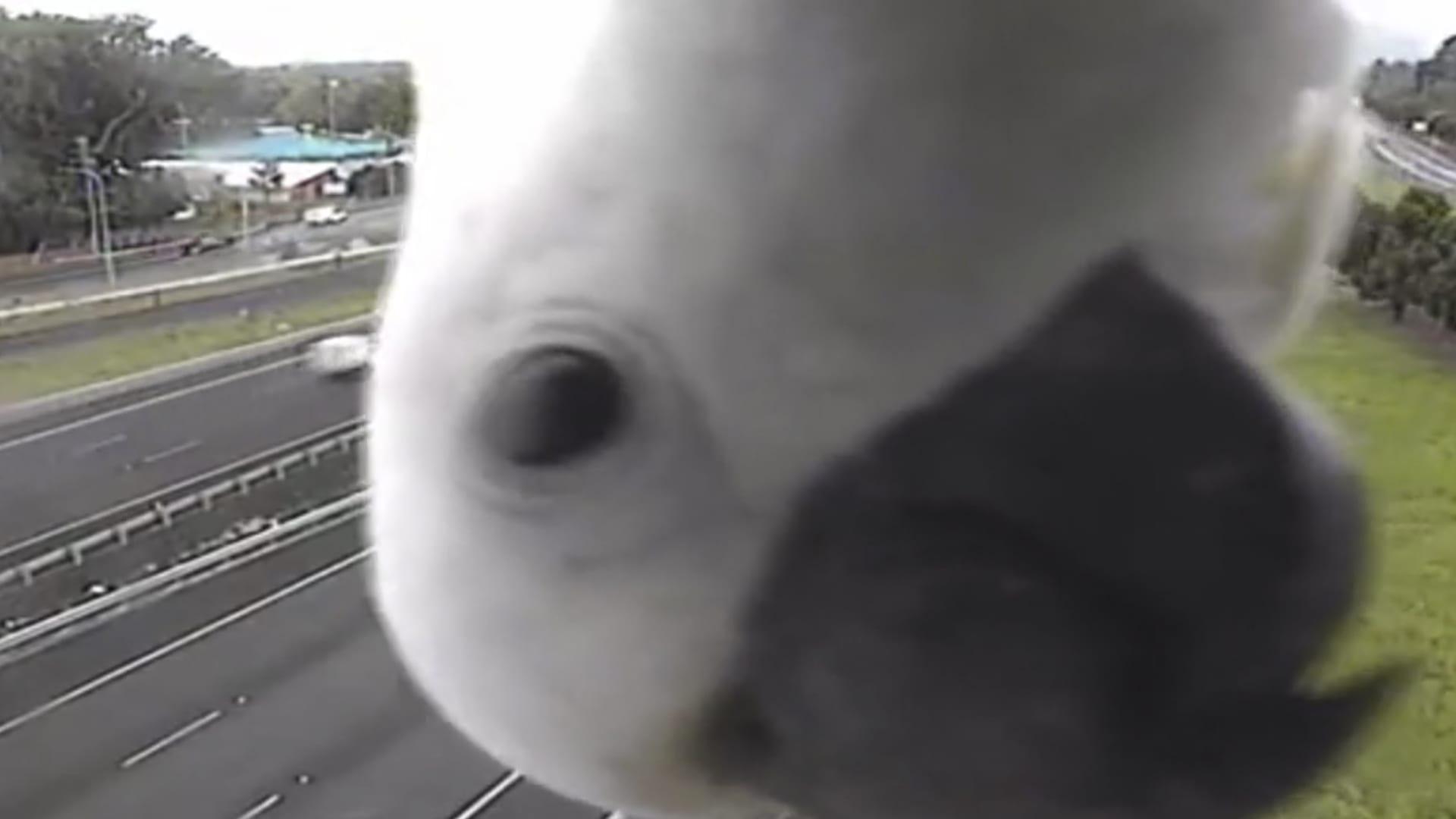 شاهد ماذا رصدت كاميرا لمراقبة الطرق في أستراليا