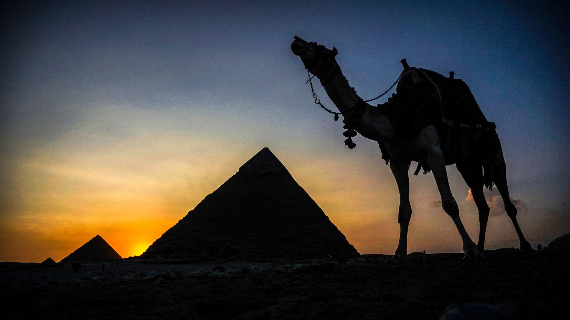 الفاكهة واللحم معاً بطبق مصري واحد اعتبره المسافرون خاصاً بالبلاد قديماً