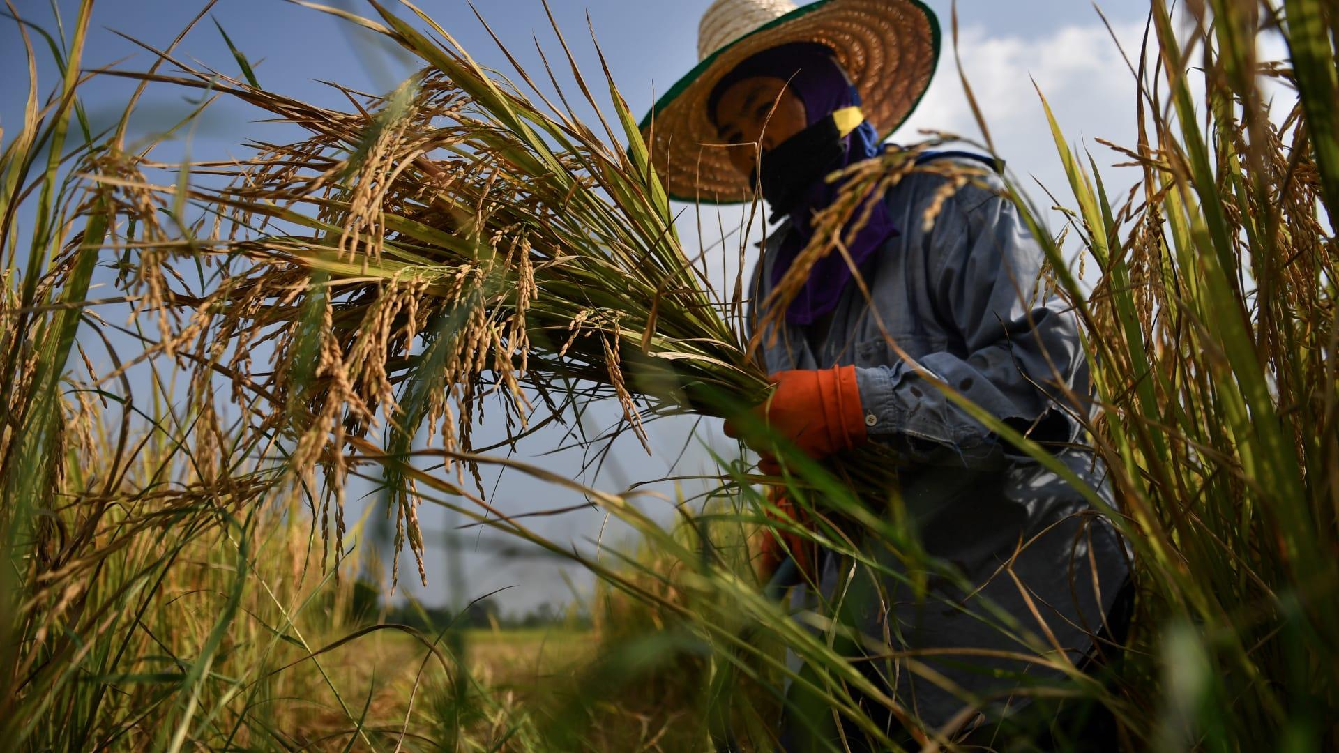 منذ بداية جائحة كورونا.. ما هو المنتج الزراعي الذي لم ينخفض سعره؟