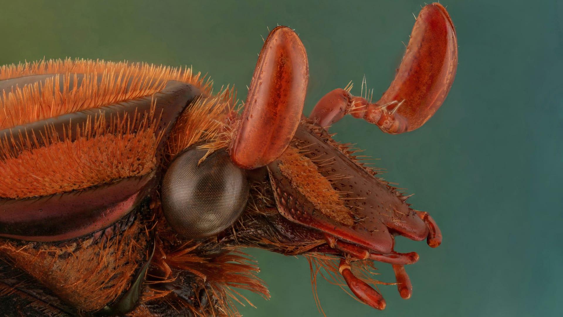 """مصور سعودي يوثق """"وحوش صغيرة"""" من عوالم الحشرات.. كيف تبدو عن قرب؟"""