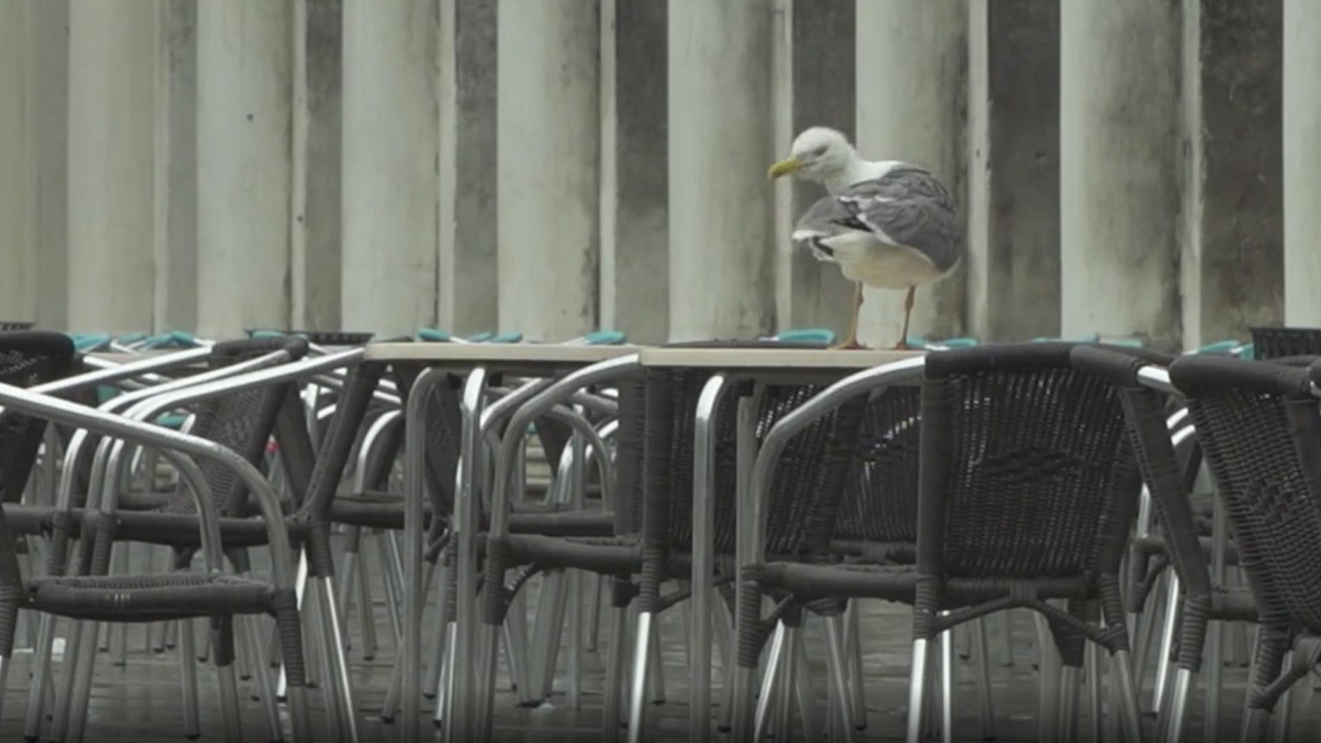 البندقية.. طيور النورس في مقاهيها أكثر من الزبائن بسبب فيروس كورونا