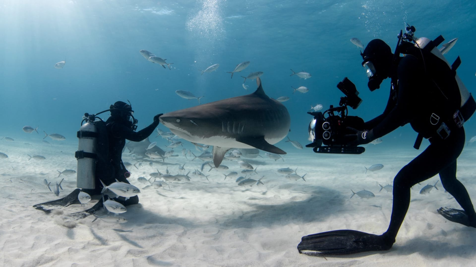 رجال لا يخشون التقاط الصور مع أسماك القرش تحت الماء.. هل تجرؤ؟