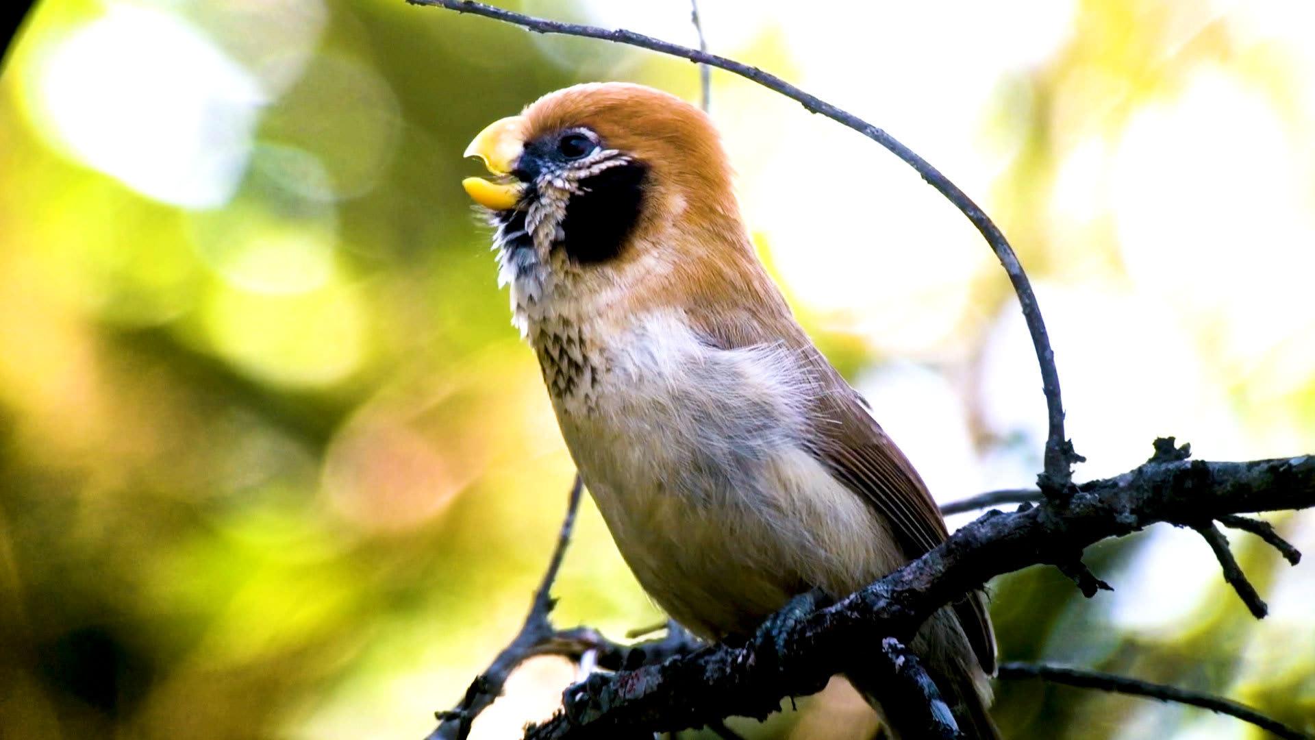 من أبوظبي إلى كوستاريكا.. حول العالم مع 6856 نوعا من الطيور