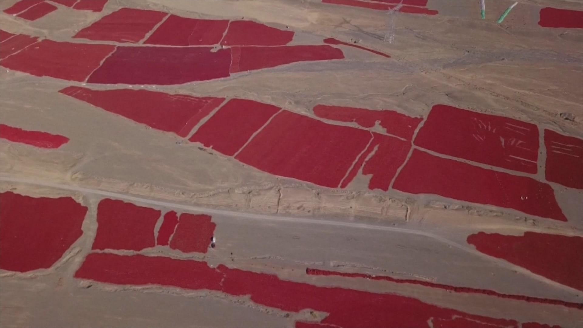 """""""بحر أحمر"""" يغطي مساحة هائلة في الصين.. والسبب فلفل حار"""