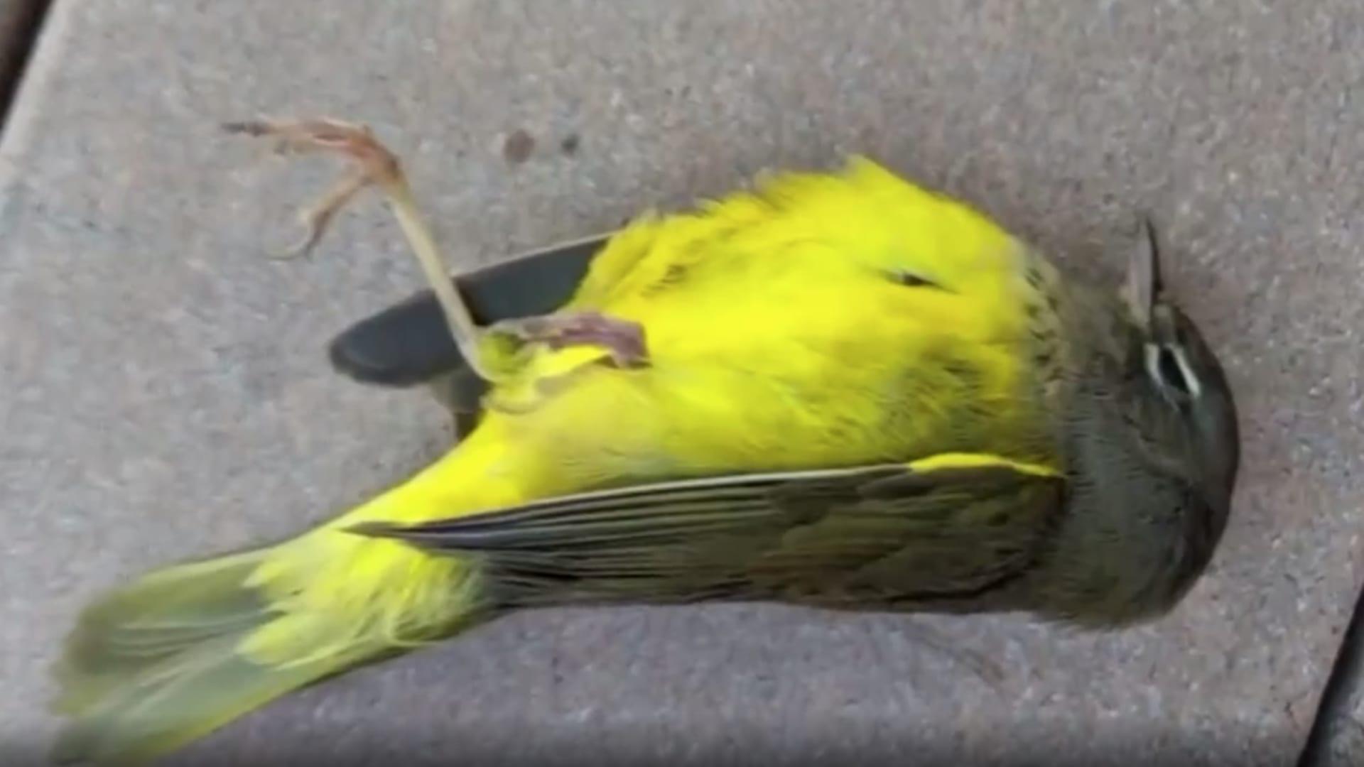 بشكل غامض.. مئات الطيور النافقة تنتشر في كولورادو