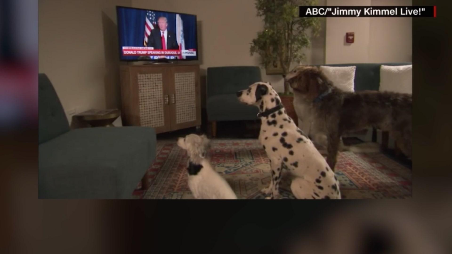 شاهد ما فعلته 3 كلاب عندما سمعت ترامب يطلب من صحفي الجلوس