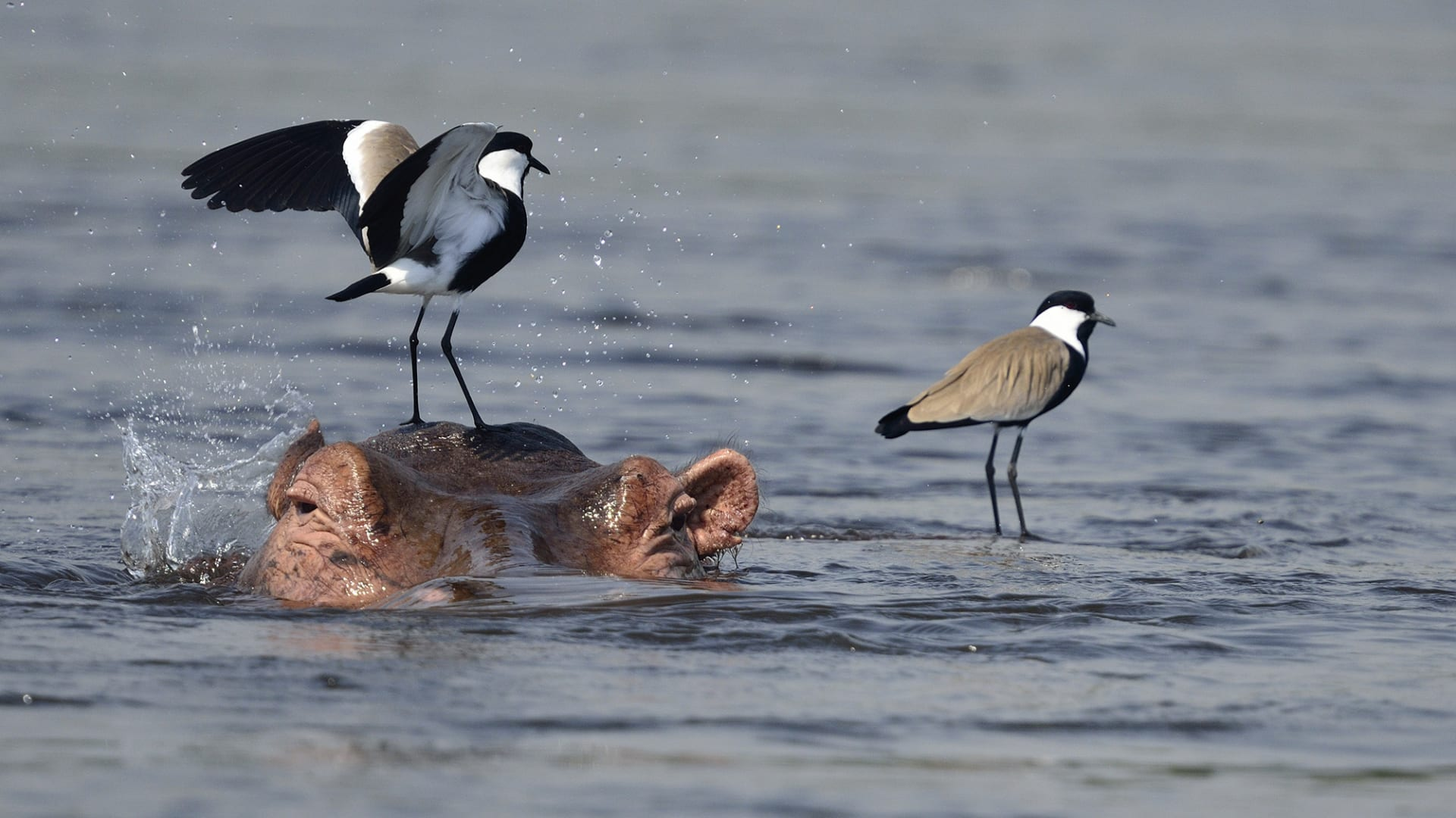 هؤلاء هم الفائزون في مسابقة التصوير الفوتوغرافي للجمعية البيئية البريطانية لهذا العام