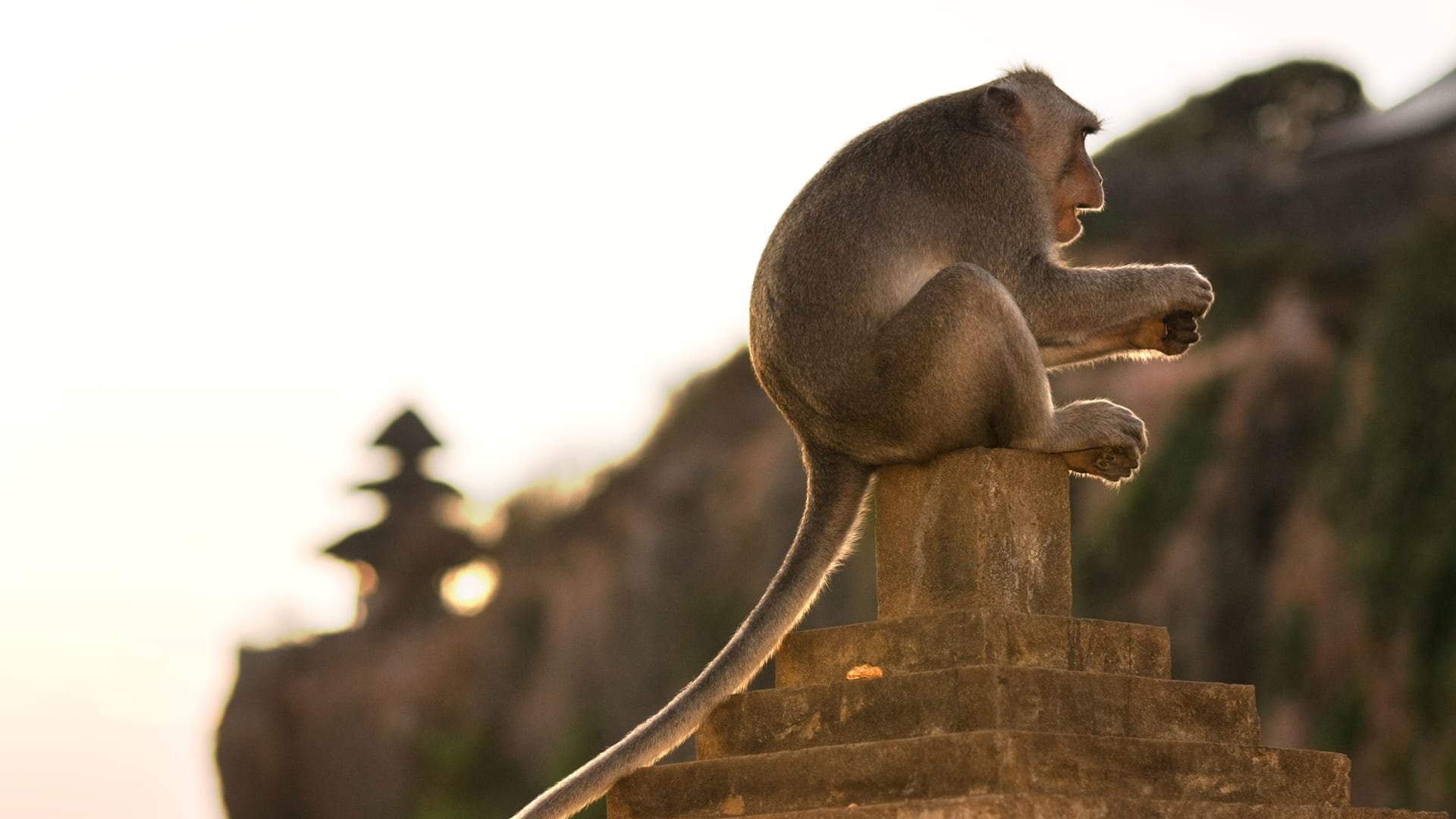 """دراسة تثبت أن هذه القردة تستطيع اتخاذ قرارات اقتصادية """"غير مسبوقة"""""""
