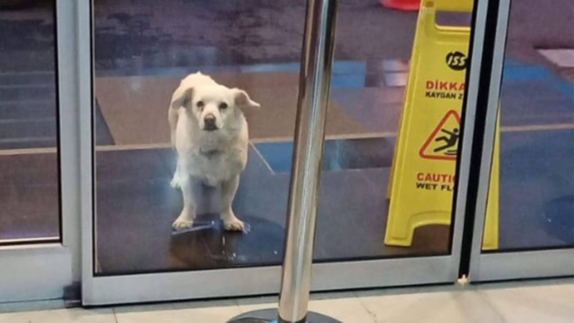 شاهد.. كلبة مخلصة تنتظر مالكها خارج المستشفى 6 أيام في تركيا