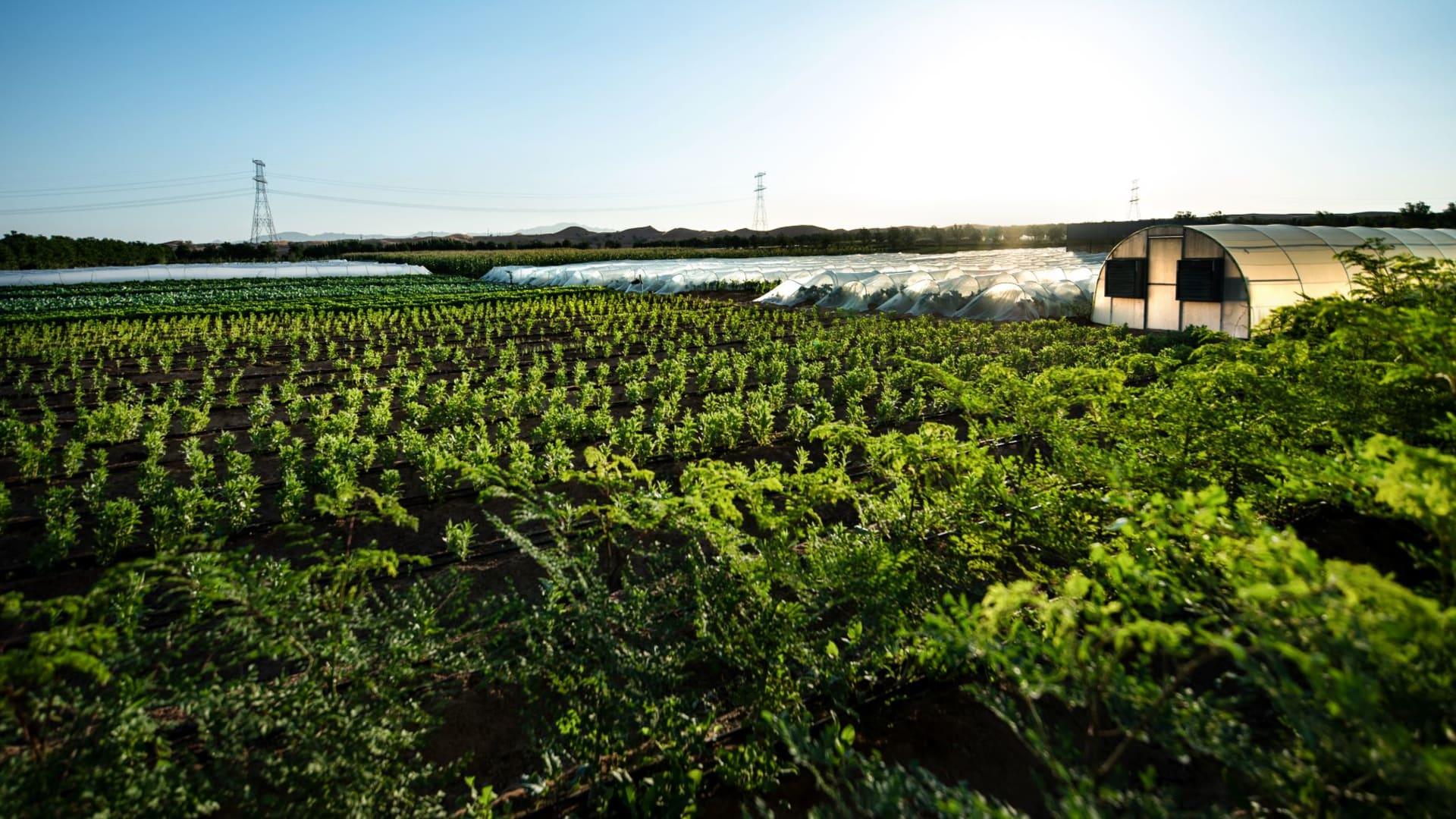 أكبر مزرعة عضوية بالإمارات تسنح لك فرصة أن تكون مزارع ليوم واحد