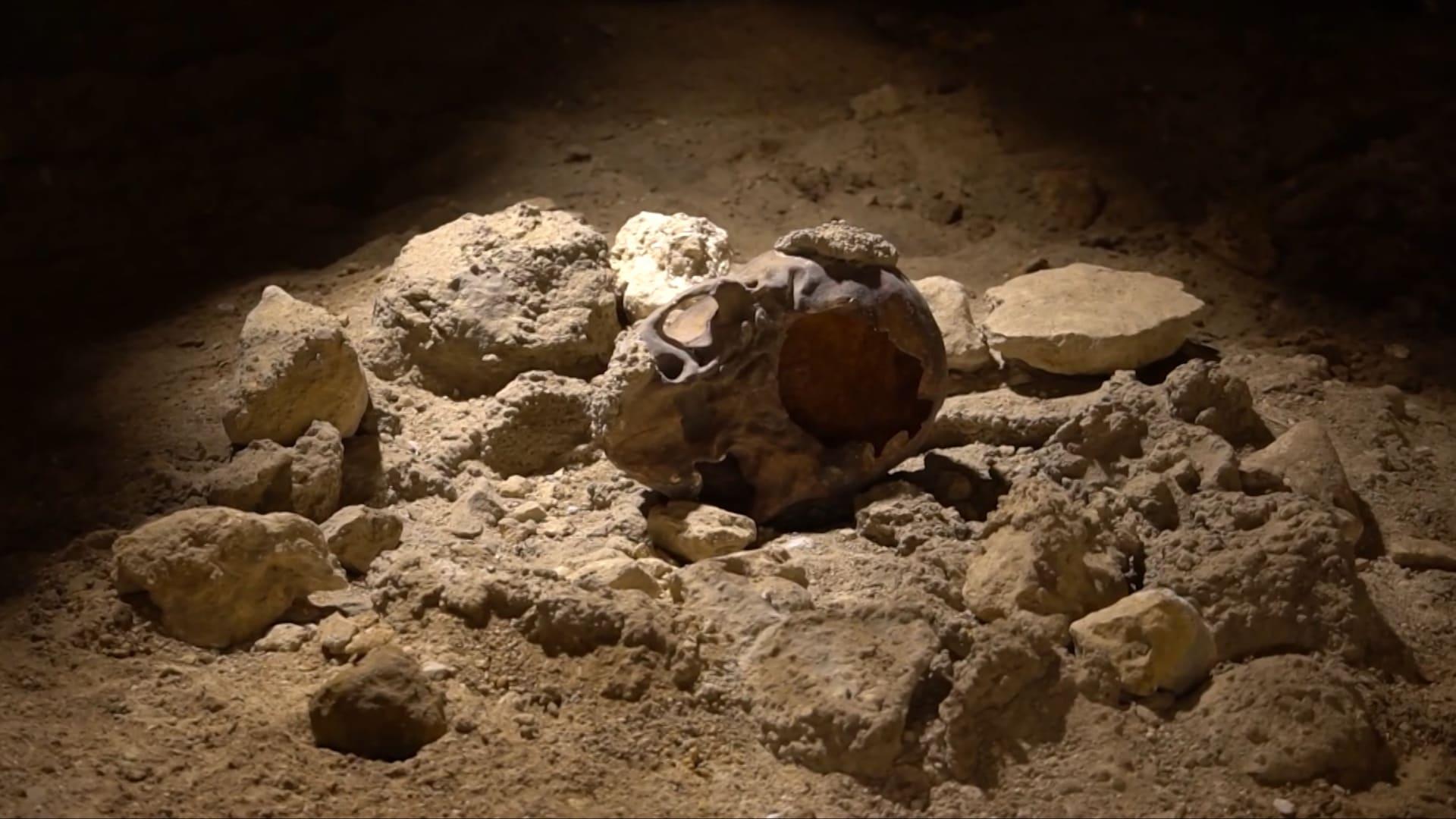 يُعتقد أنهم لقوا حتفهم بسبب الضباع.. اكتشاف بقايا إنسان نياندرتال بإيطاليا تعود لعشرات الآلاف من الأعوام