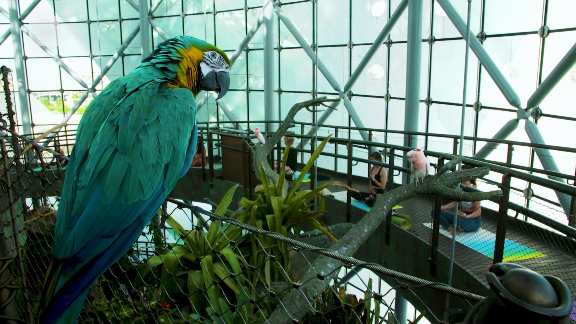 """متعة لمحبي اليوغا في دبي.. يمكنك الآن ممارسة التأمل في """"غابة مطيرة"""" بين أكثر من 3000 نوع من الحيوانات"""