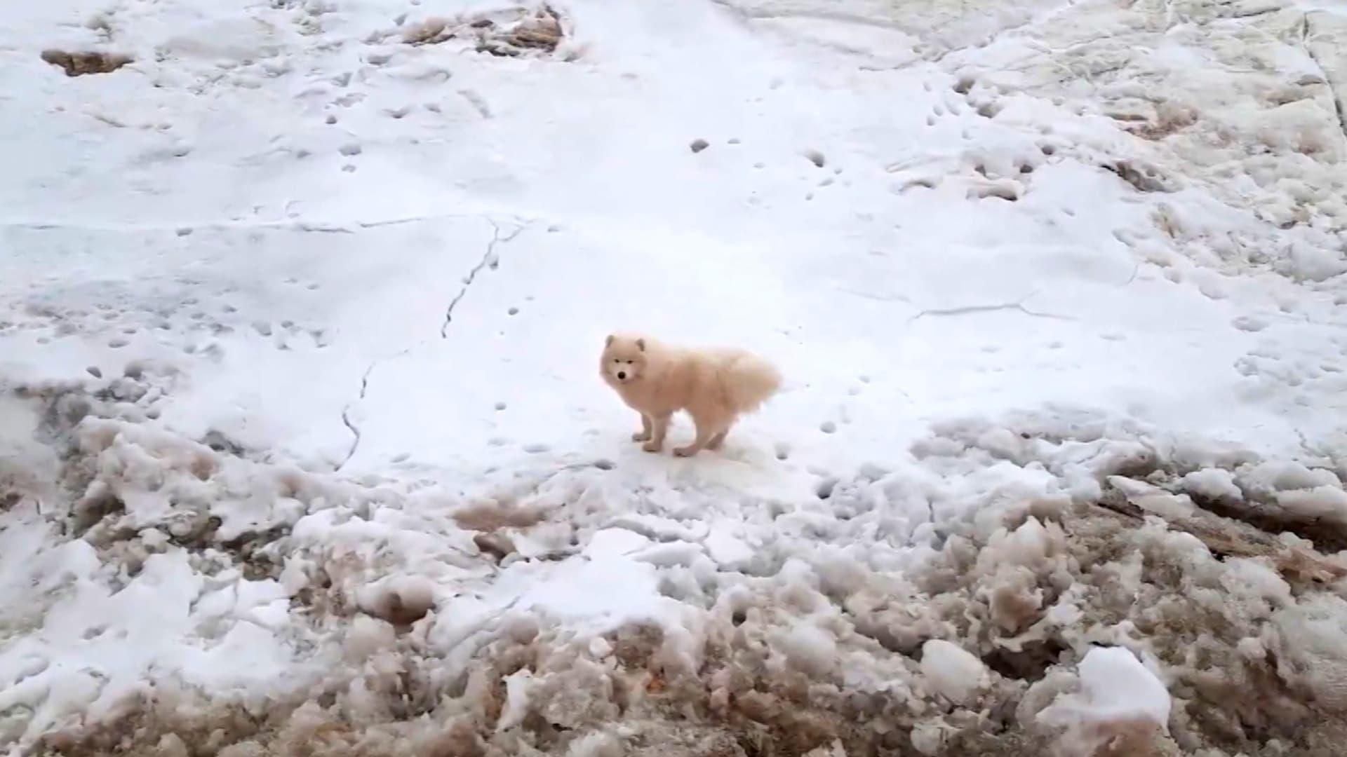 شاهد.. طاقم بحارة ينقذون كلبة تقطعت بها السبل في القطب الشمالي
